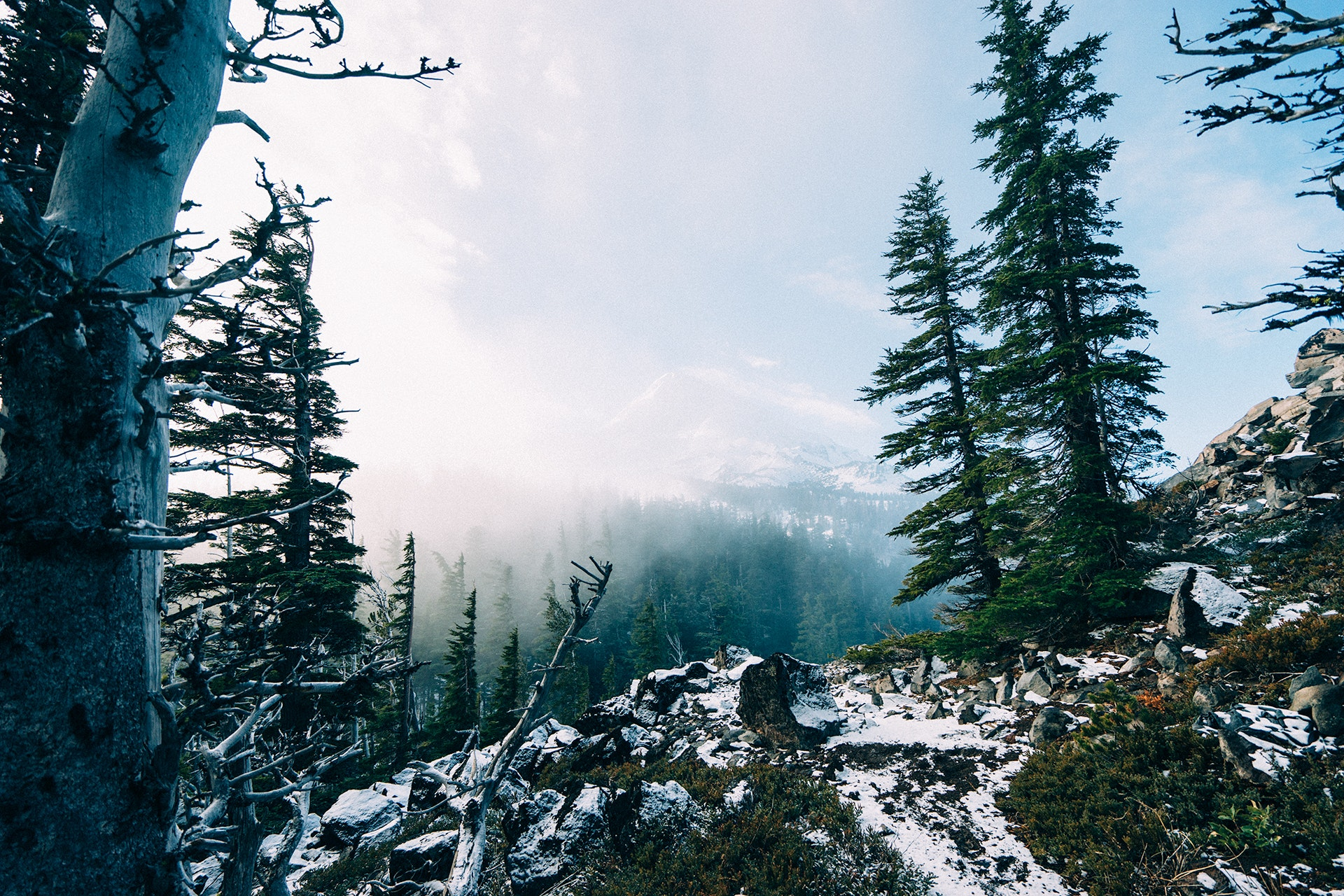 Free stock photo of fog, forest, mountains