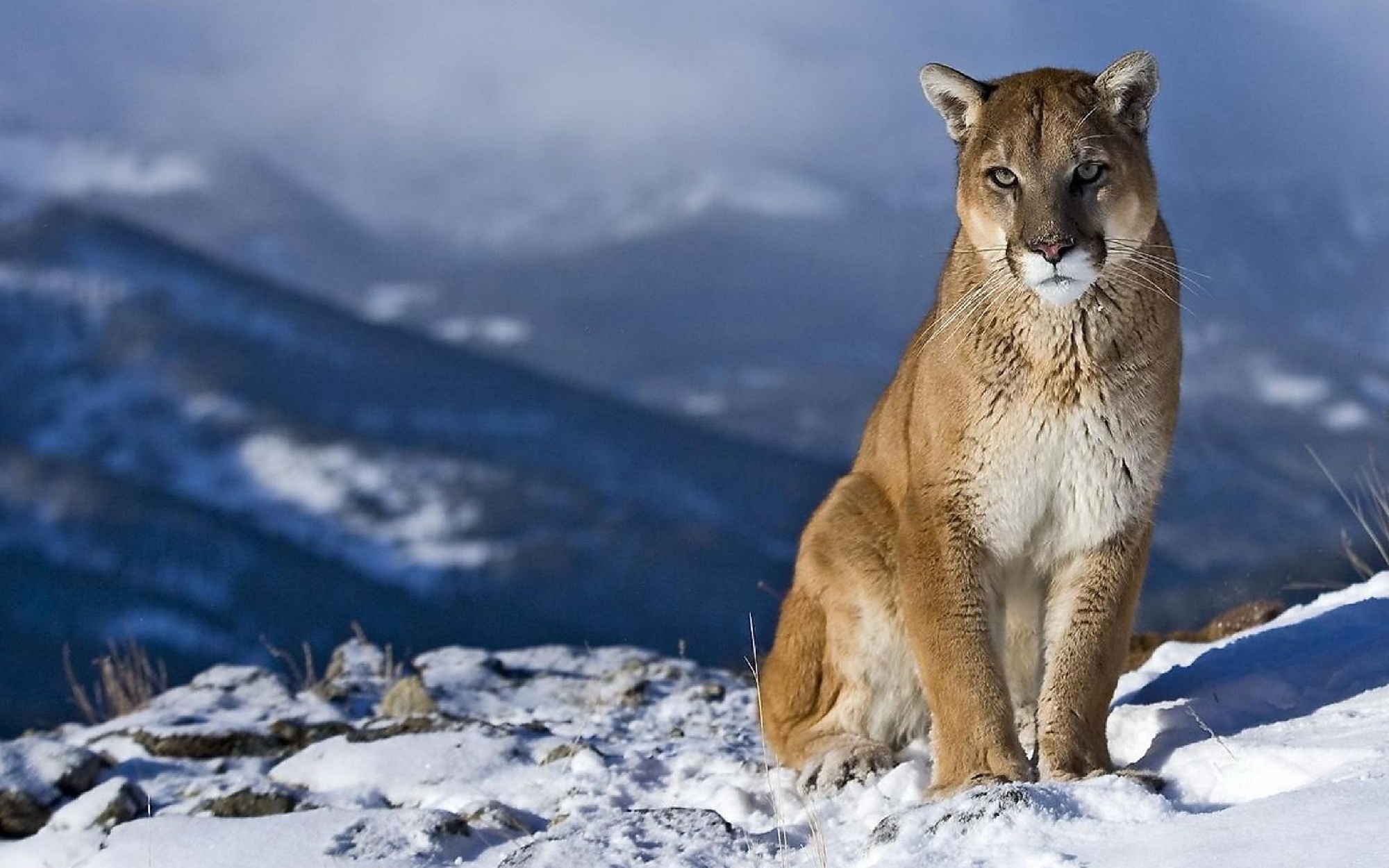 Rapid City Man Charged in Mountain Lion Case - KDLT