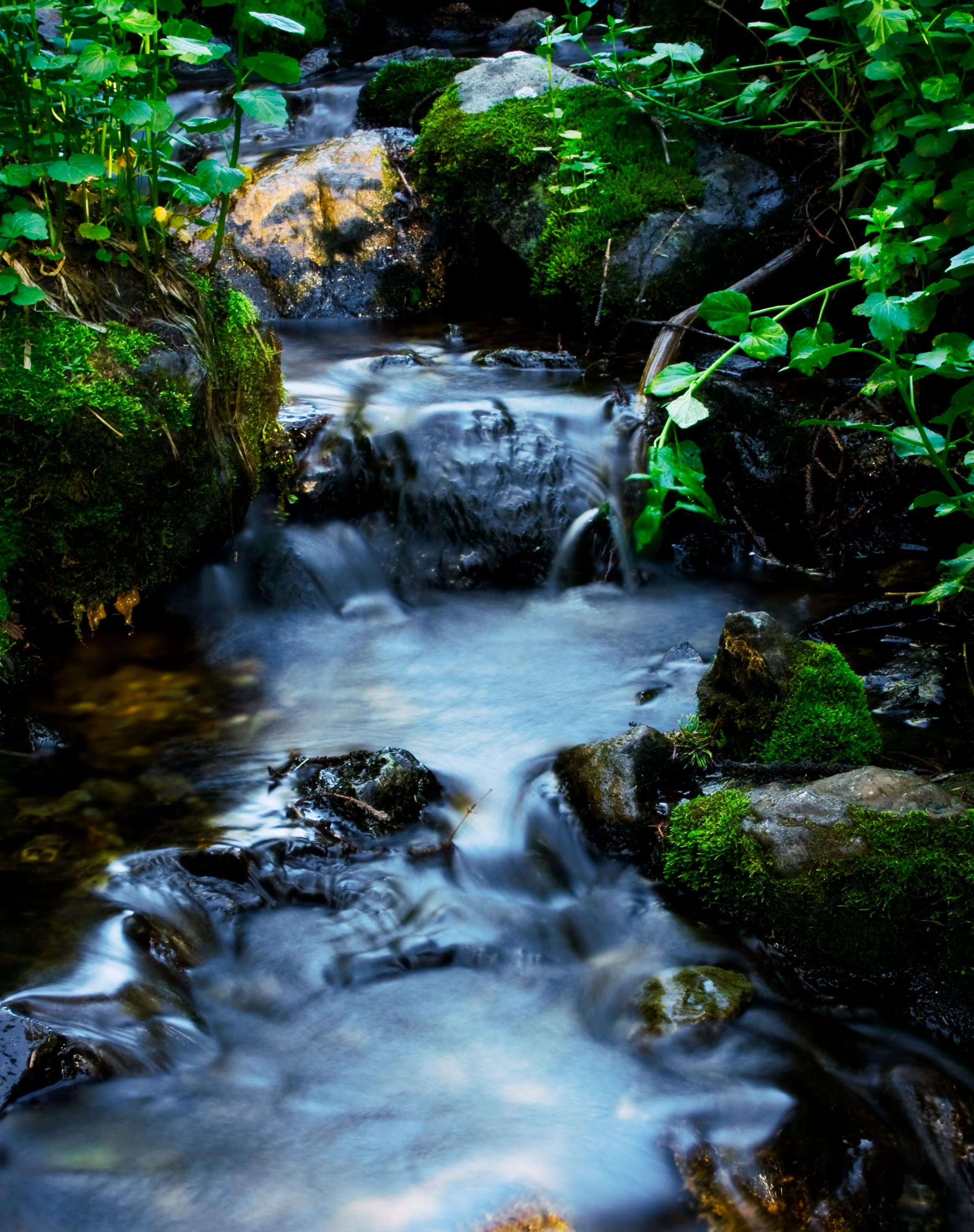 Mountain Stream, Algae, Exposure, Flowing, Fresh, HQ Photo