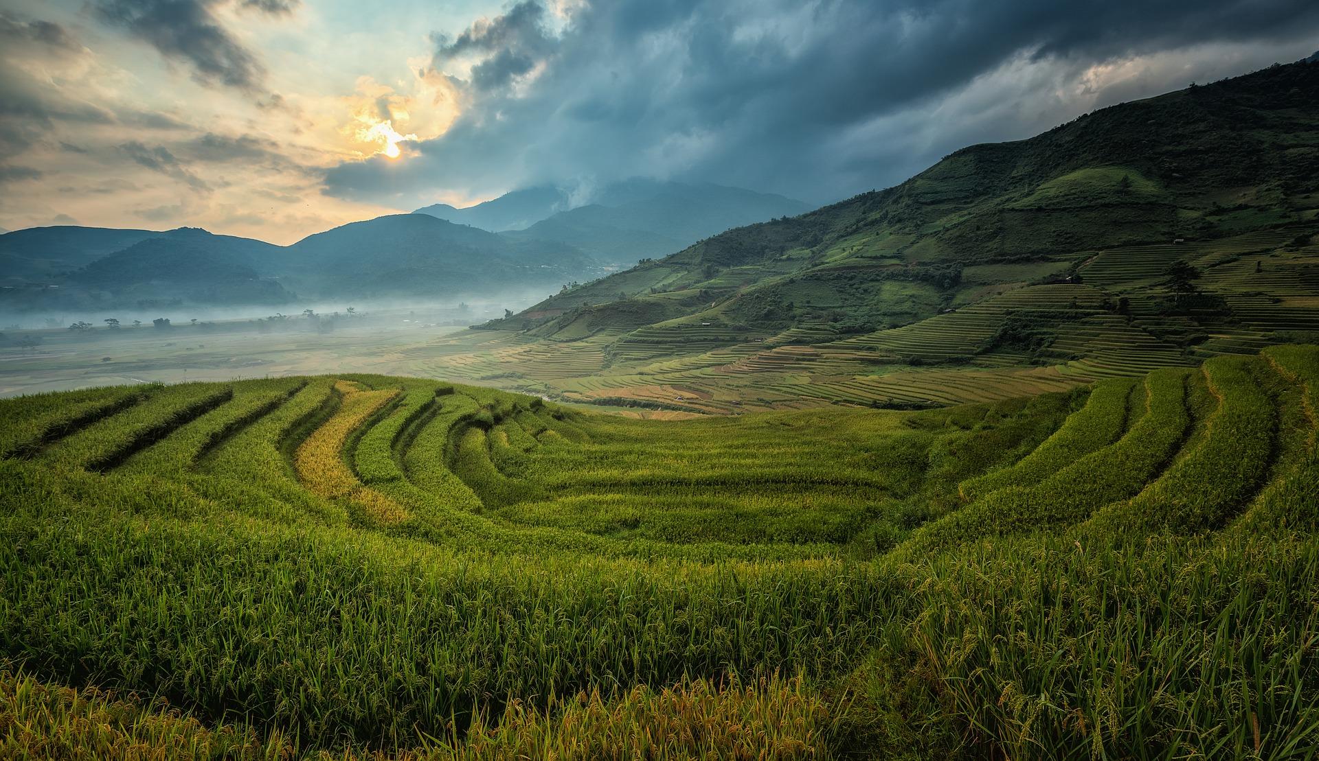 Mountainous rice plantation photo