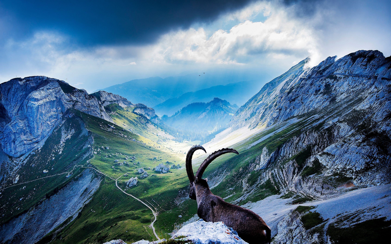 Mount Pilatus | An : Deers / Goats / Sheep / Cows | Pinterest ...