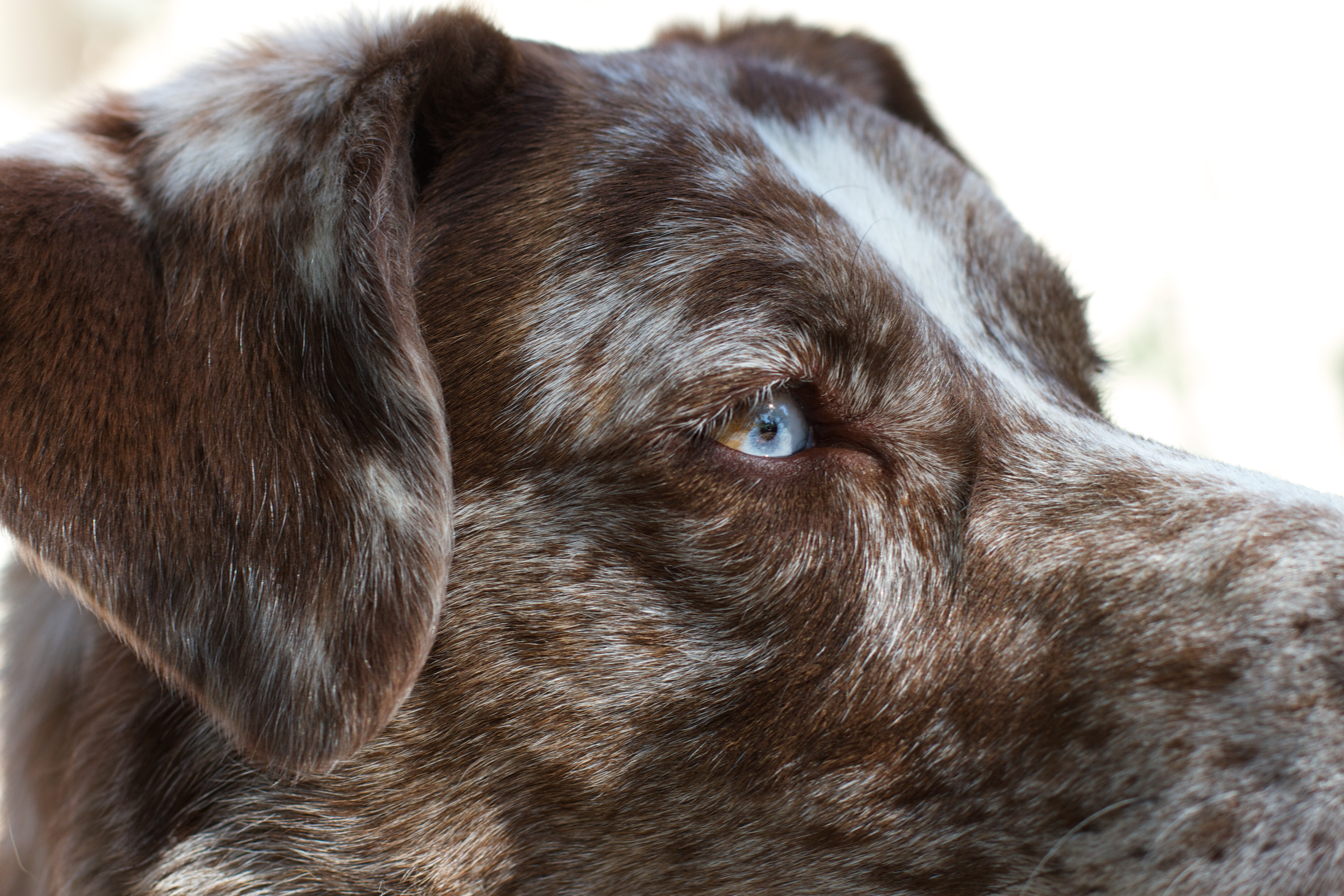 Mr blue (and brown) eye photo