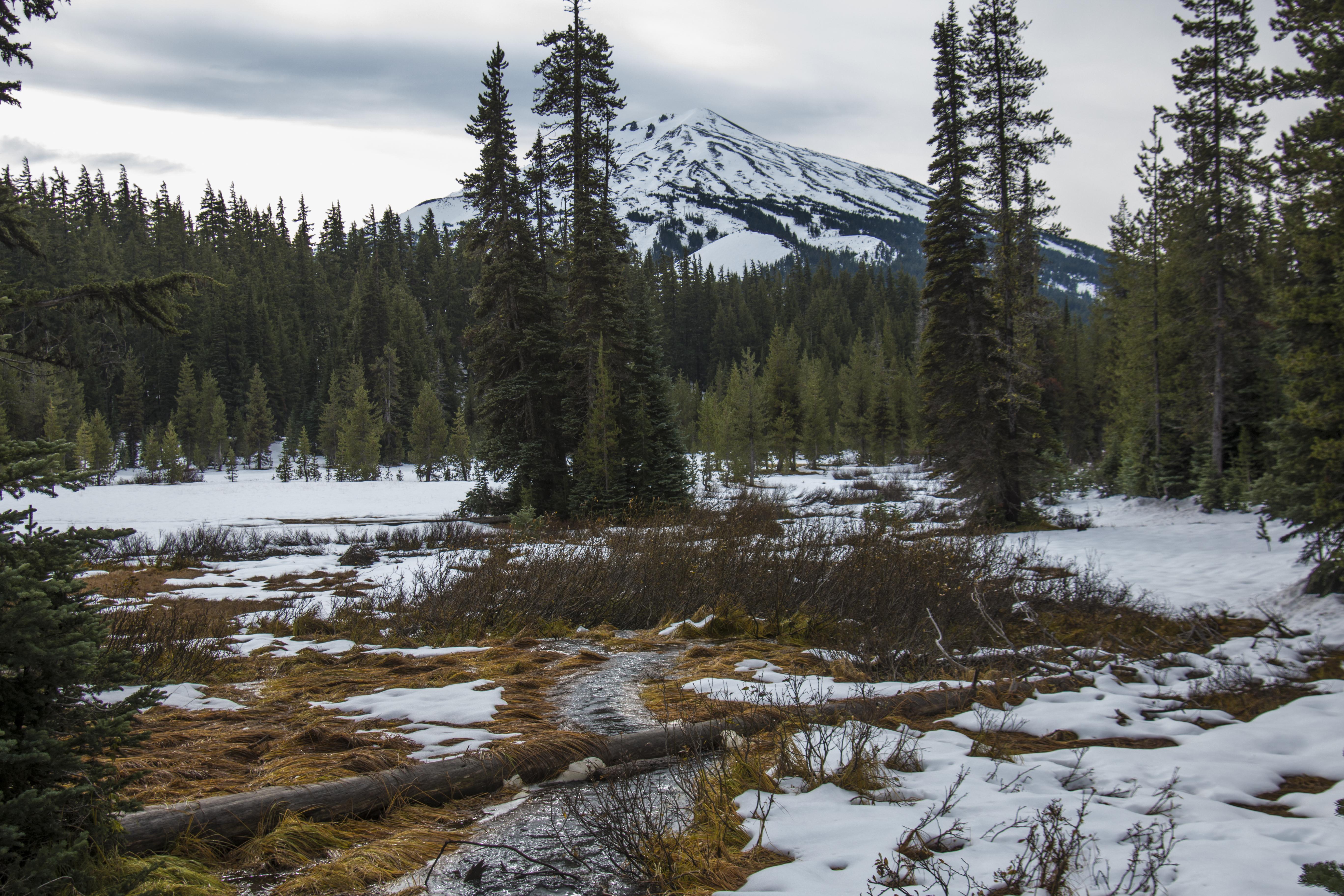 Mt. Bachelor, Oregon, First Snow, Sky, Snow, Tree, Wood, HQ Photo
