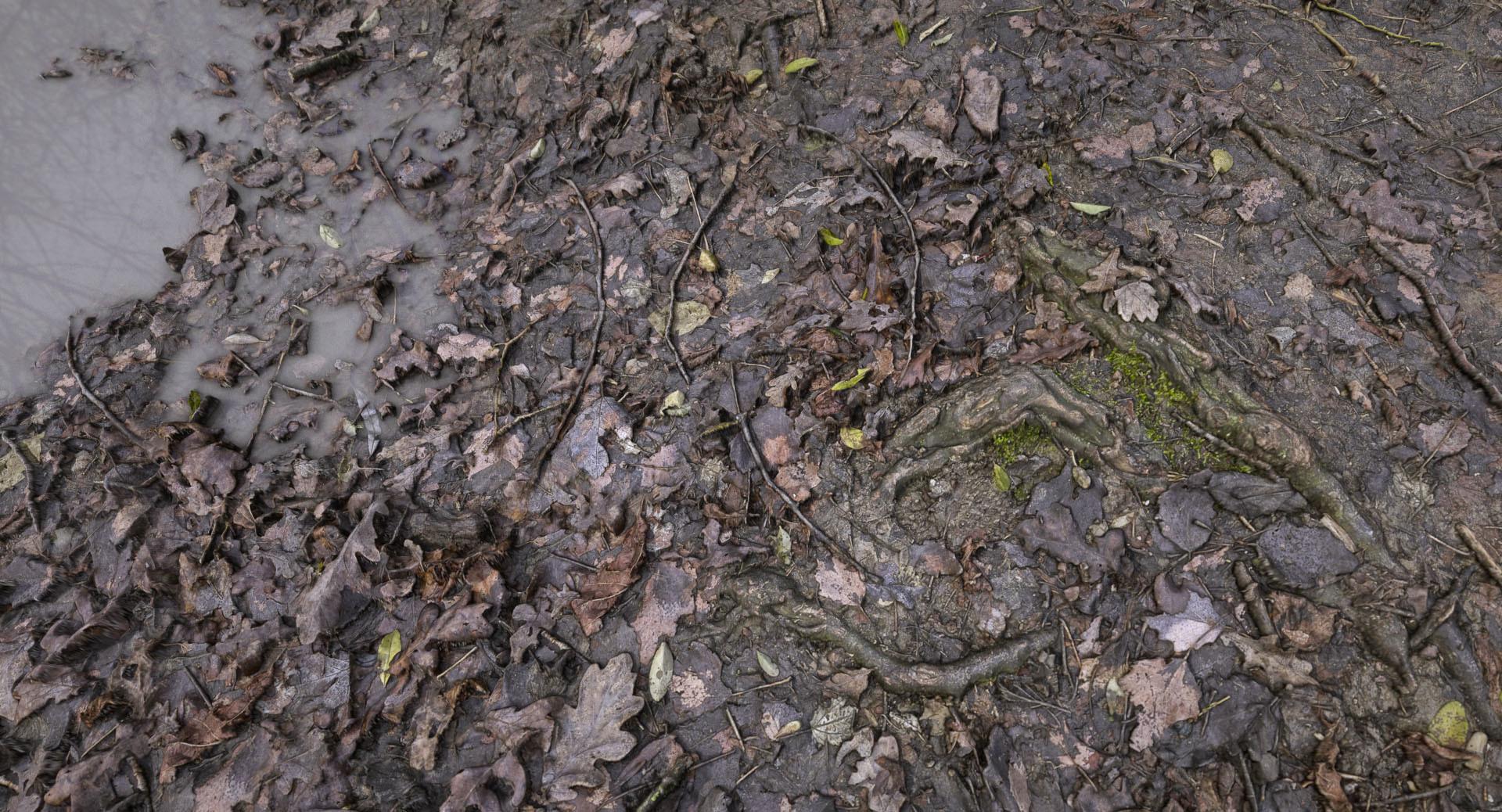ArtStation - RDTexture - Muddy-forest-floor, Christoph Schindelar