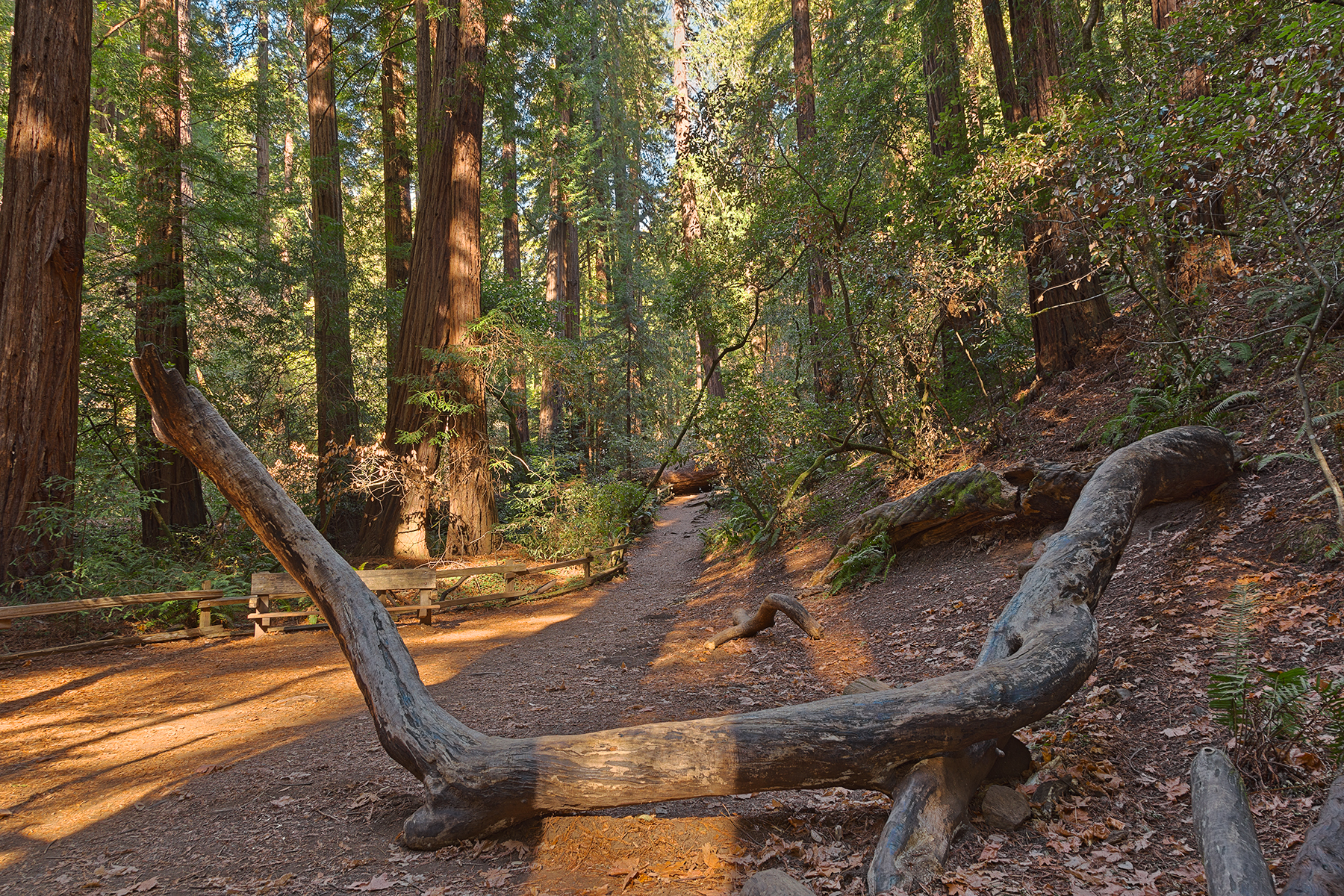 Muir Woods Trail - HDR, America, Somadjinn, Shadows, Shadow, HQ Photo