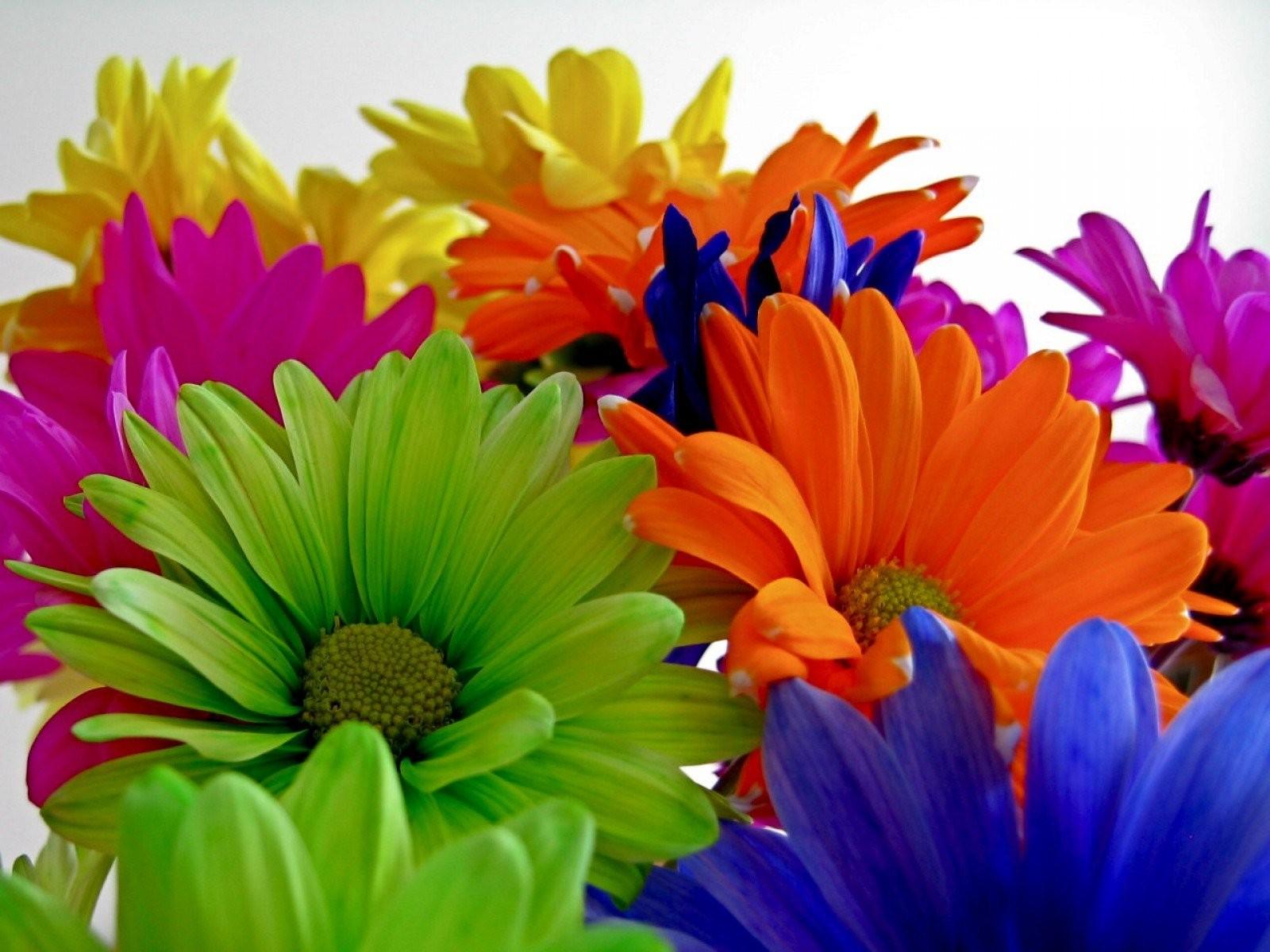 Free photo: Multi Color Flowers - Plants, Nature, Multicolor - Free ...