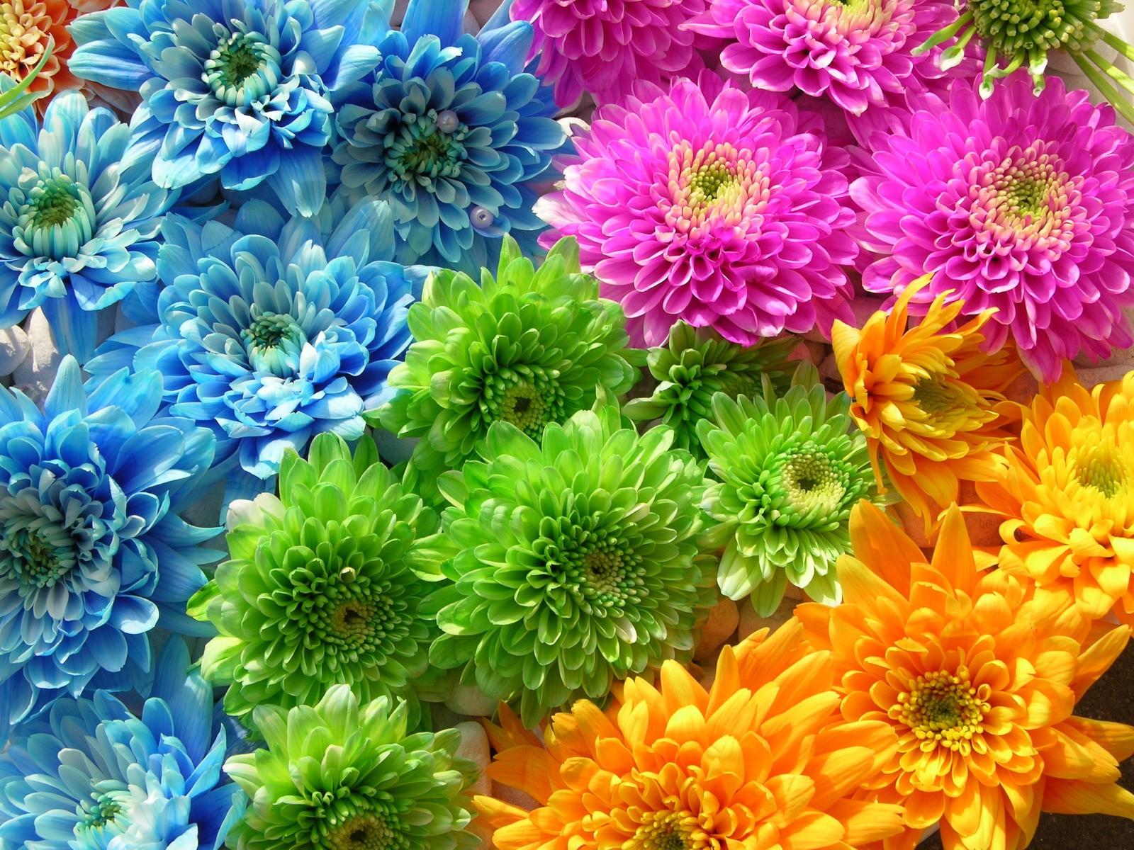 Download Multicolor Flowers Wallpaper 1600x1200 | Wallpoper #401900