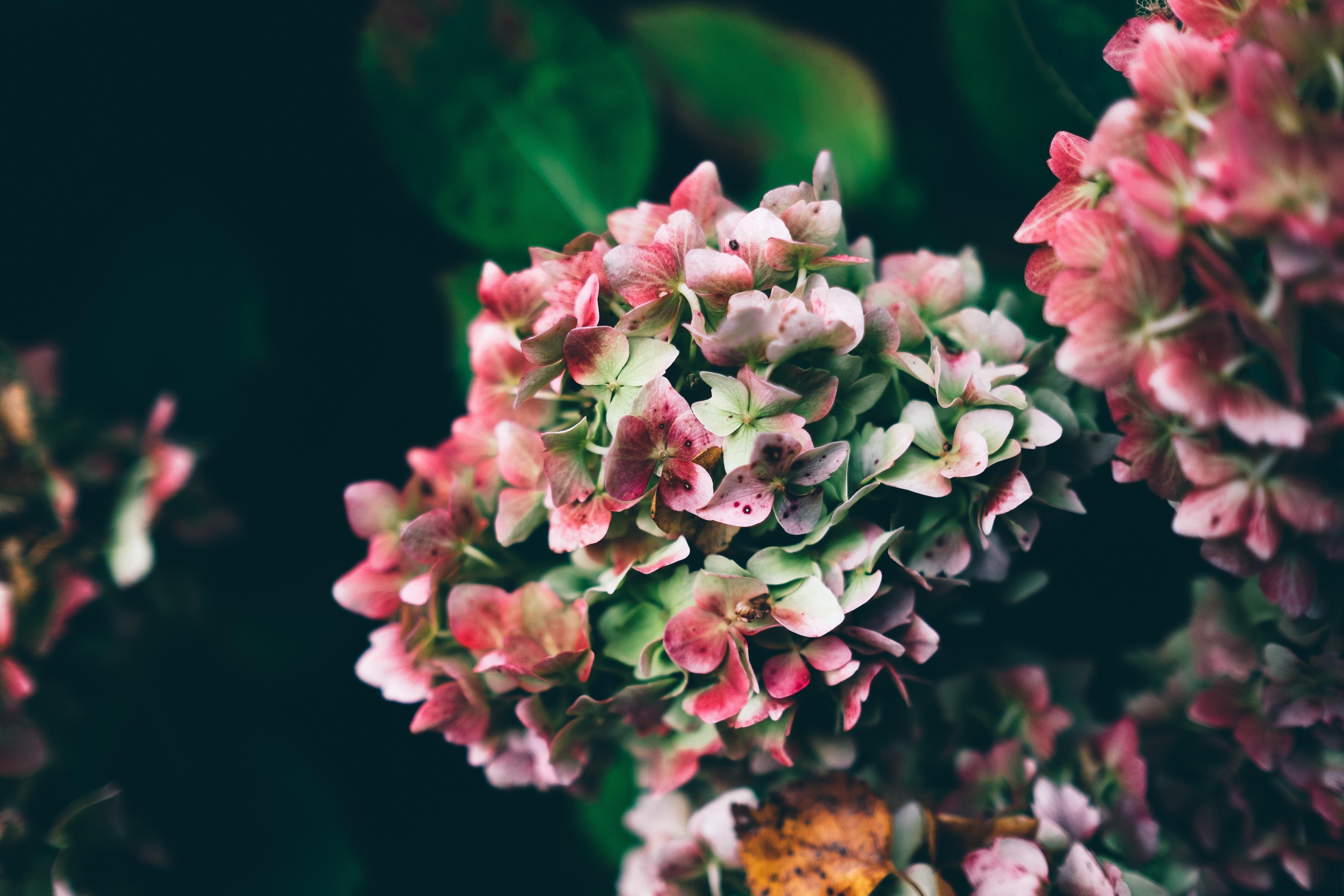 Multi Color Flowers, Color, Flowers, Multi, Multicolor, HQ Photo