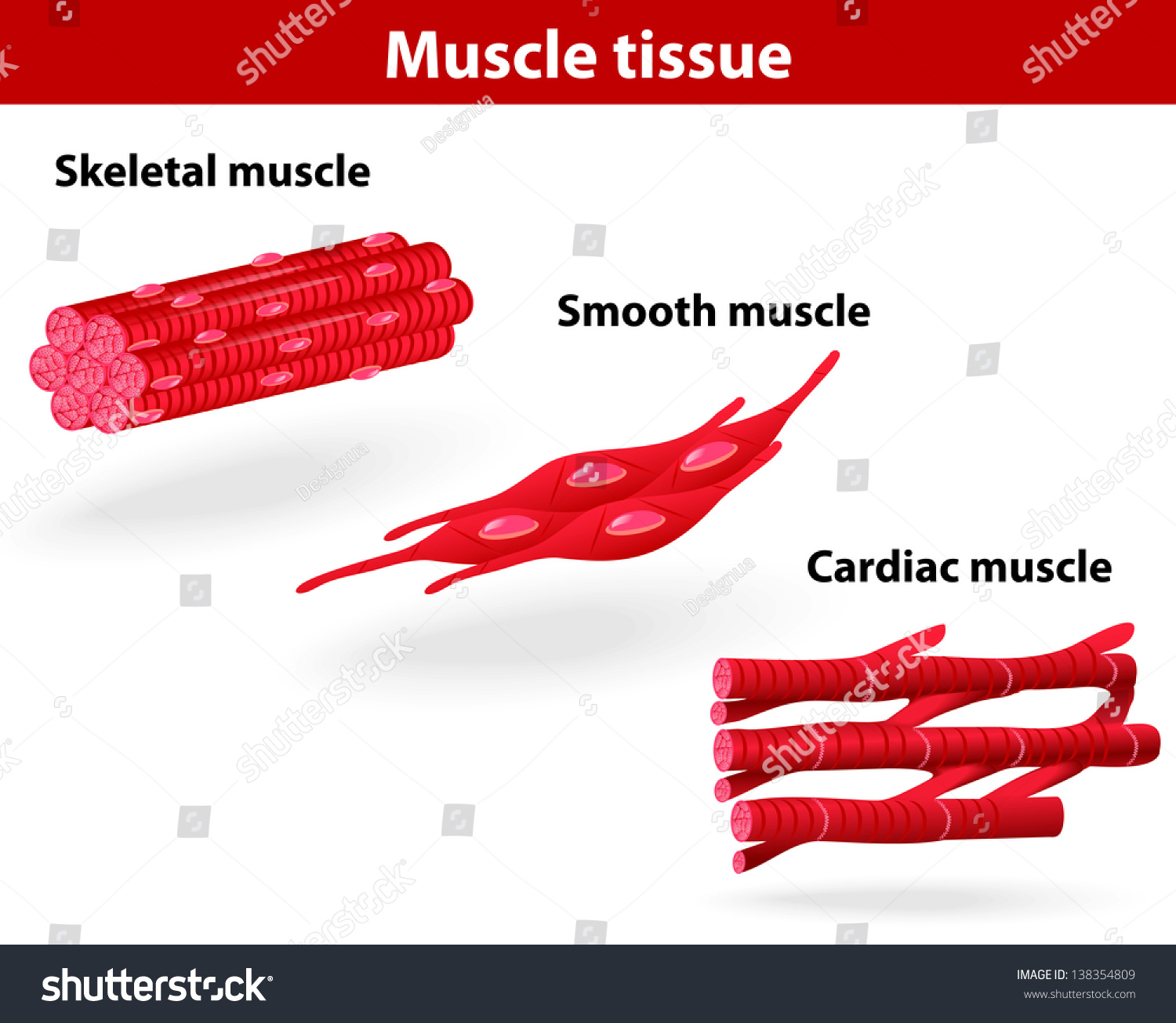 Free photo: Muscle tissue - research, science, muscular - Non ...