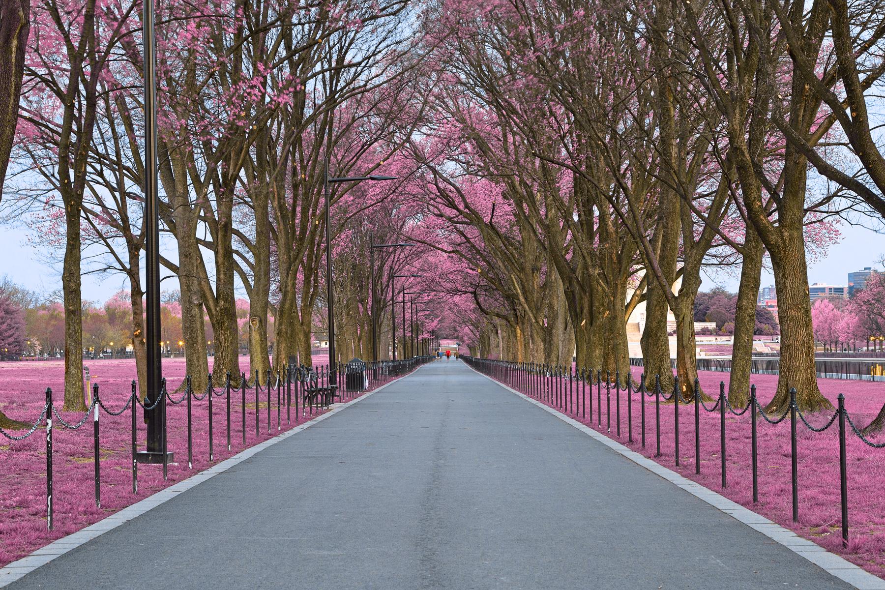 National Mall Promenade - Pink HDR, America, Railing, Shadow, Shades, HQ Photo