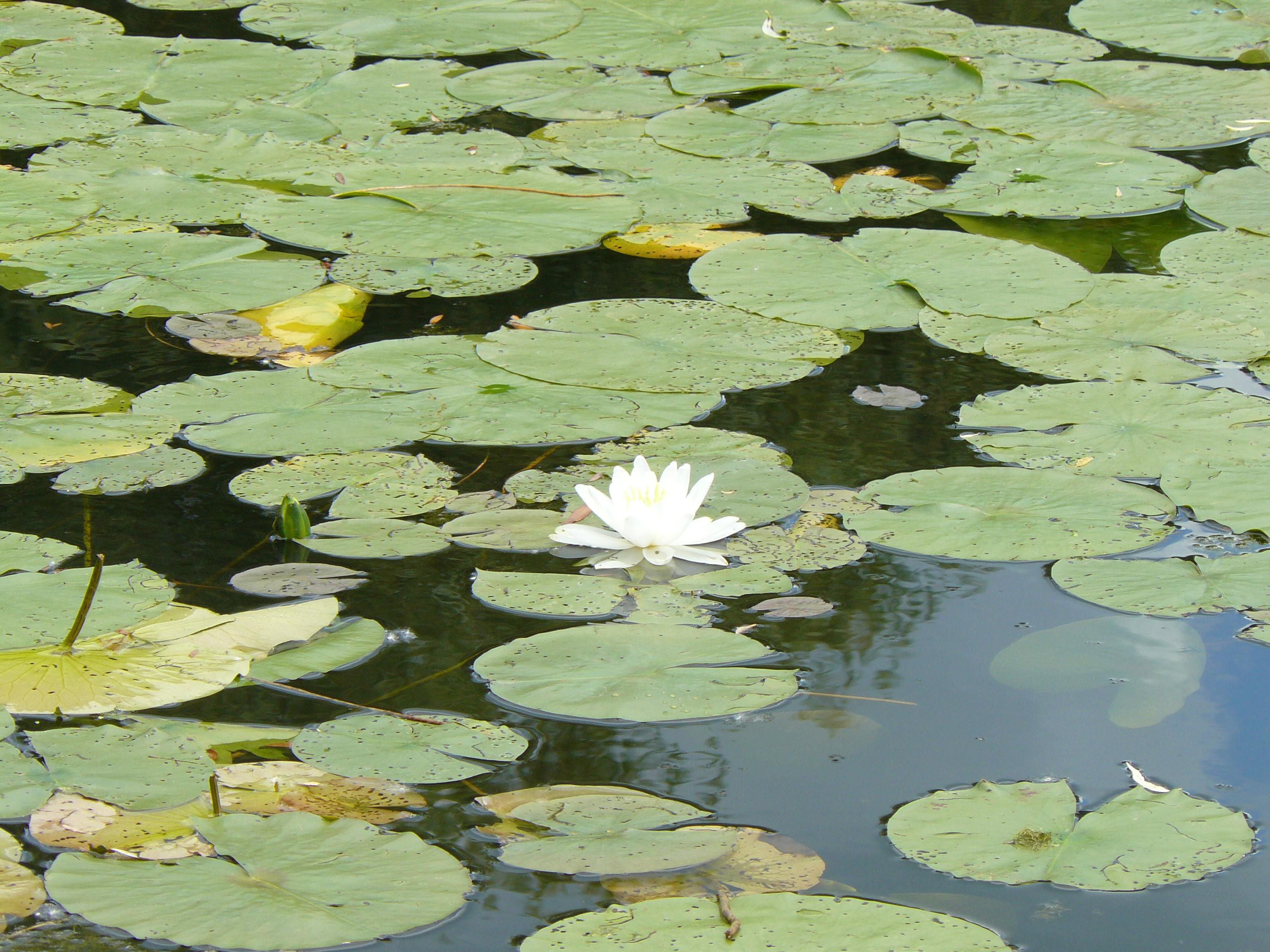 Natural beauty of hidden lake gardens photo