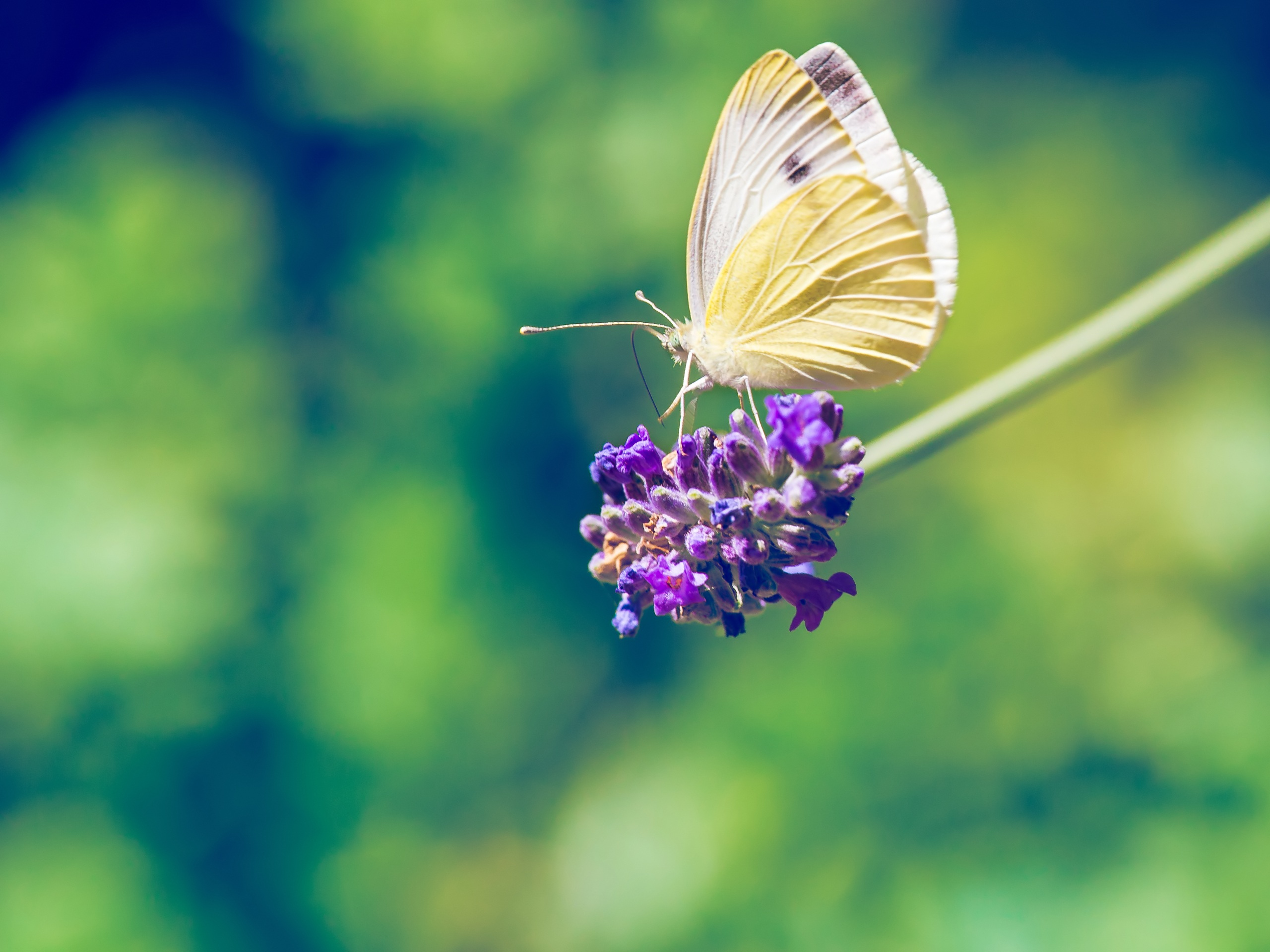 Nature, Blooming, Butterfly, Flower, Fly, HQ Photo