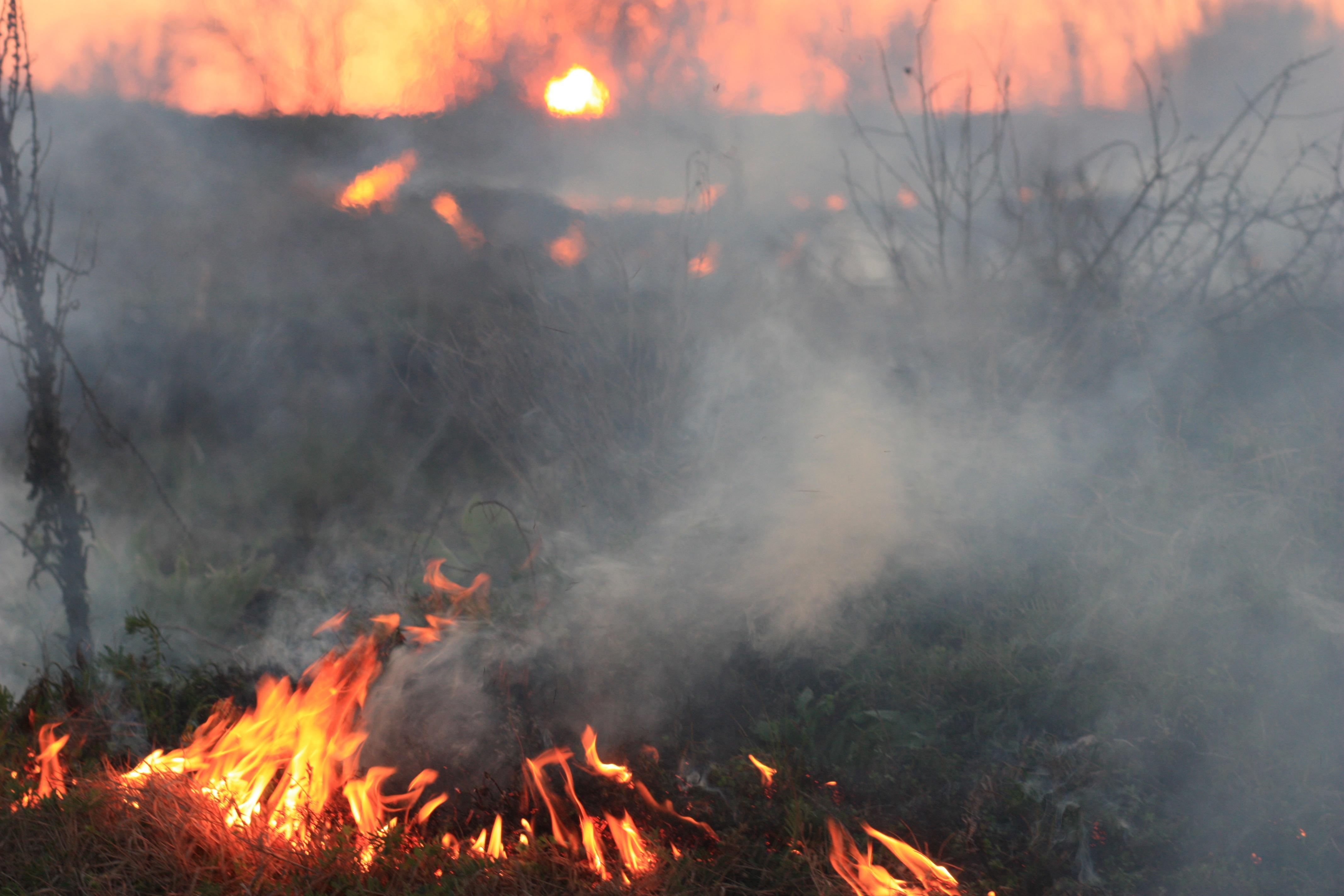 Nature, Fire, Forest, Hot, Jungle, HQ Photo
