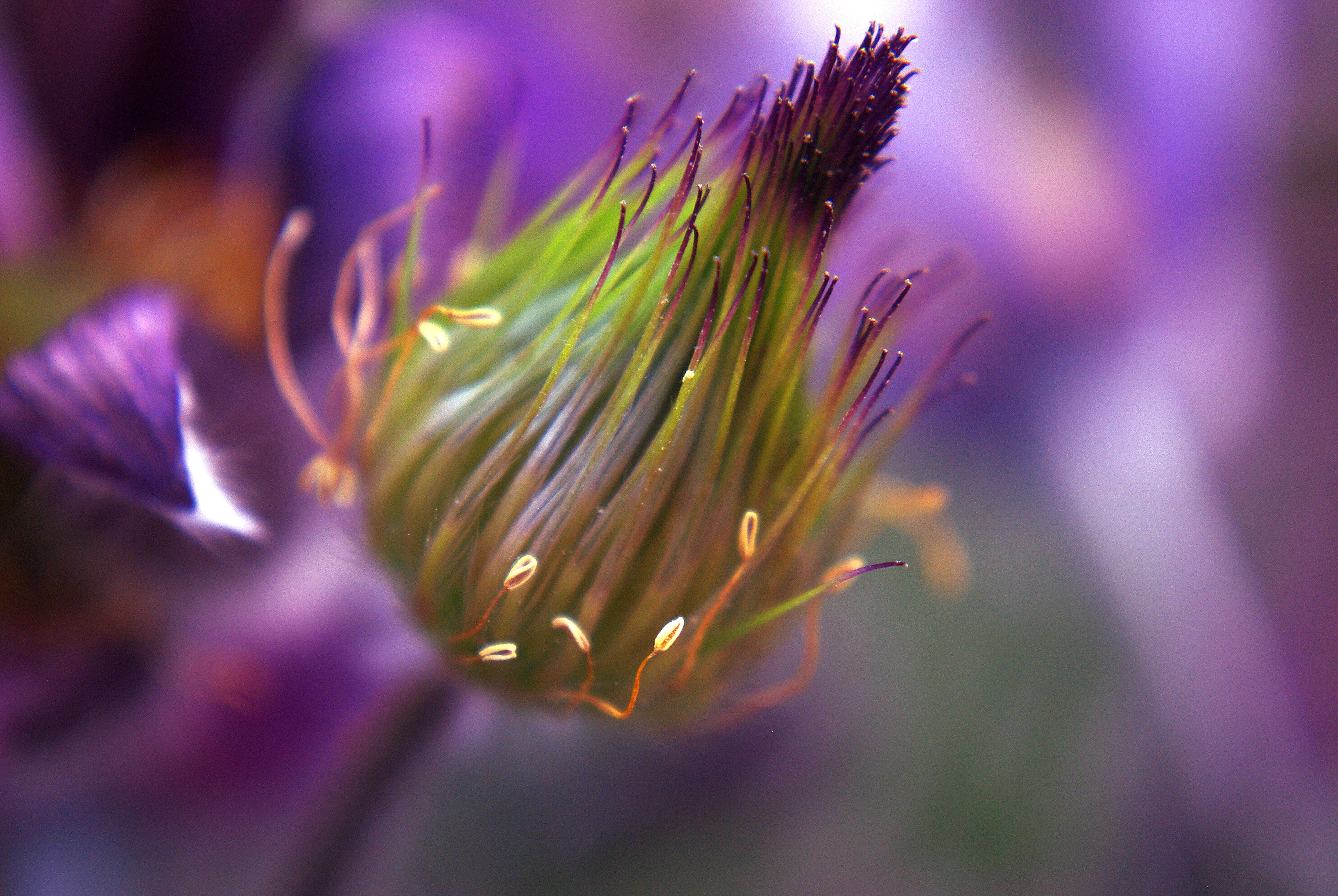 Nature, Beauty, Flower, Fresh, Freshness, HQ Photo