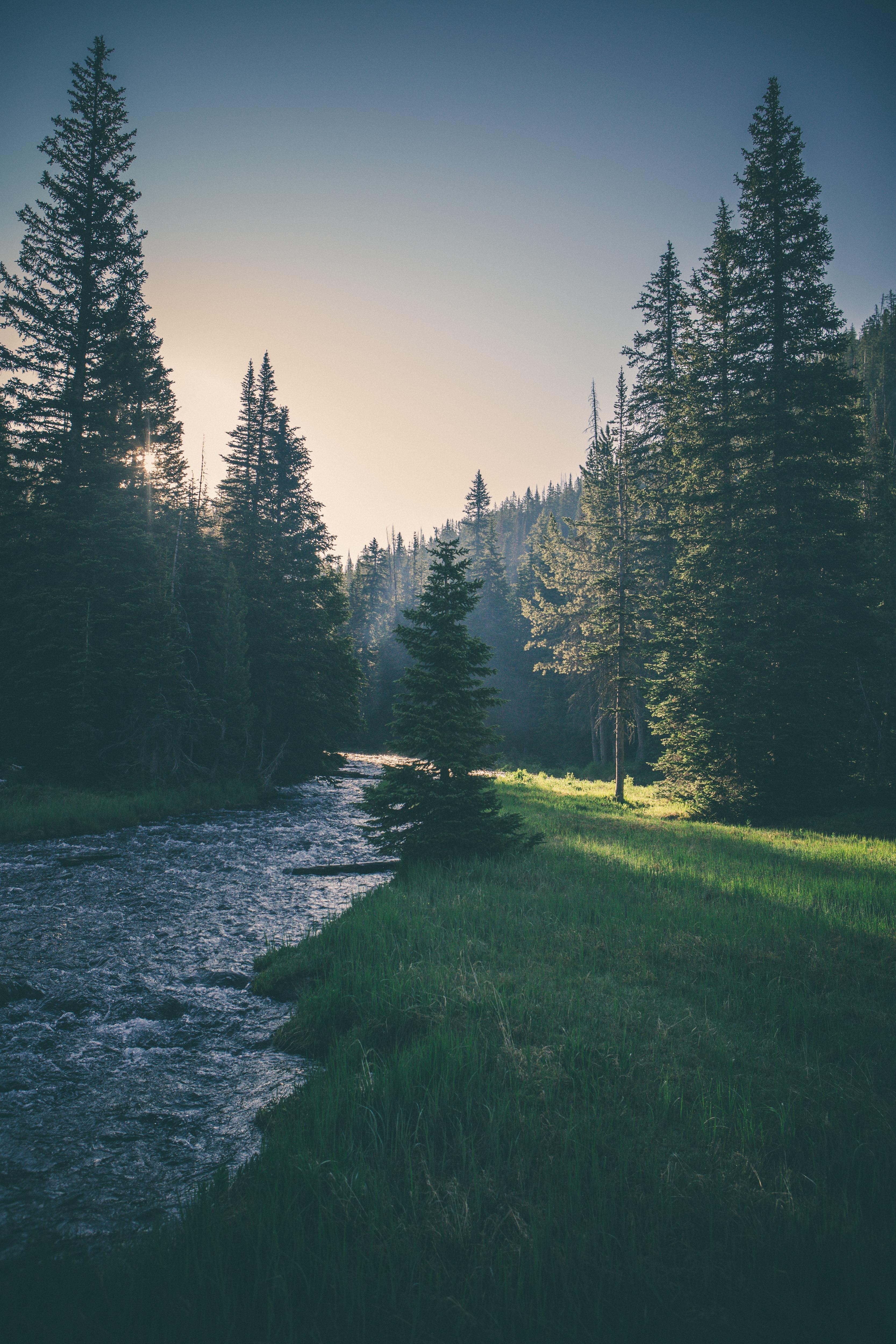 Nature, Tree, Water, Landscape, Jungle, HQ Photo