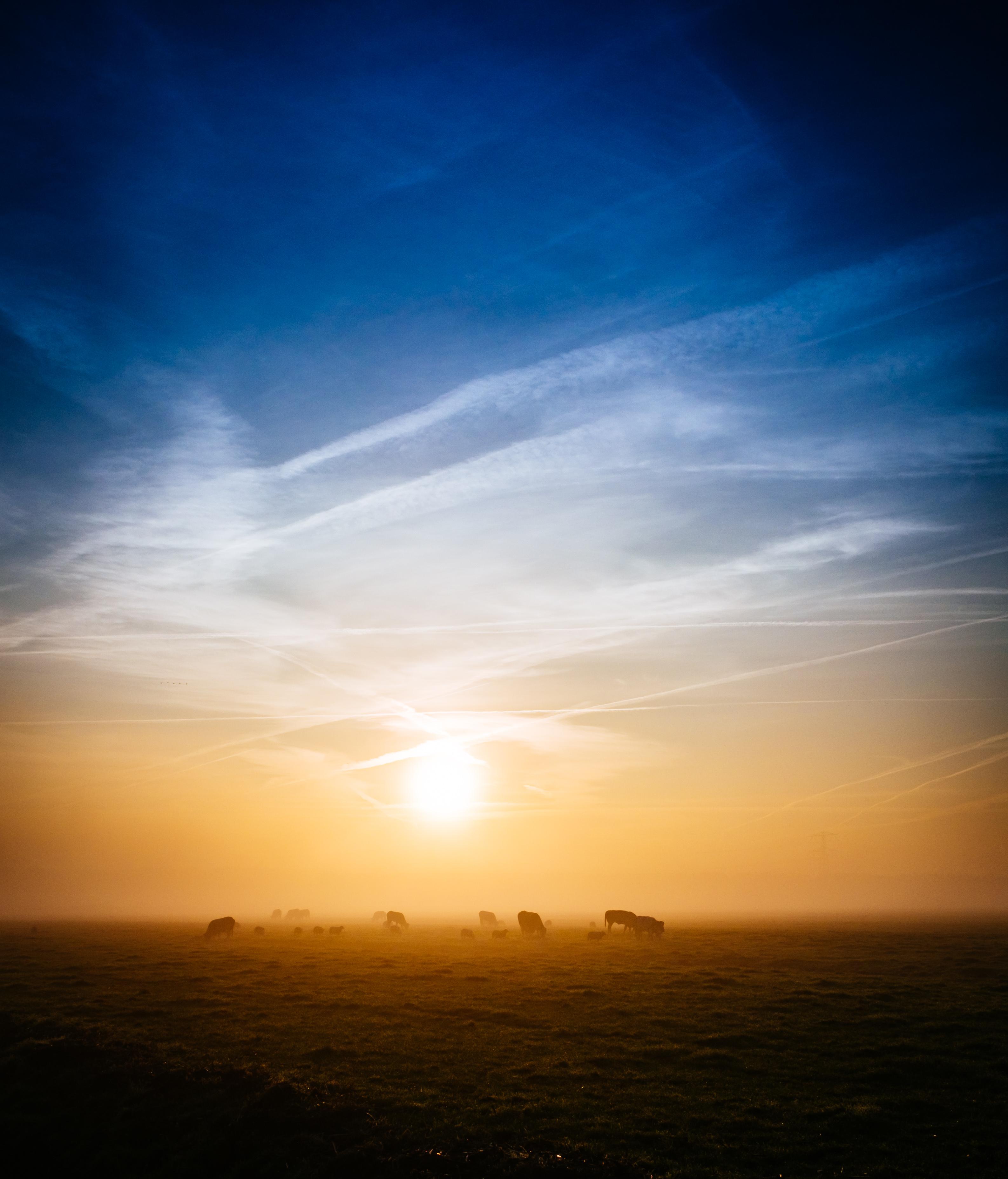 Nature, Animals, Herd, Herding, Sunset, HQ Photo