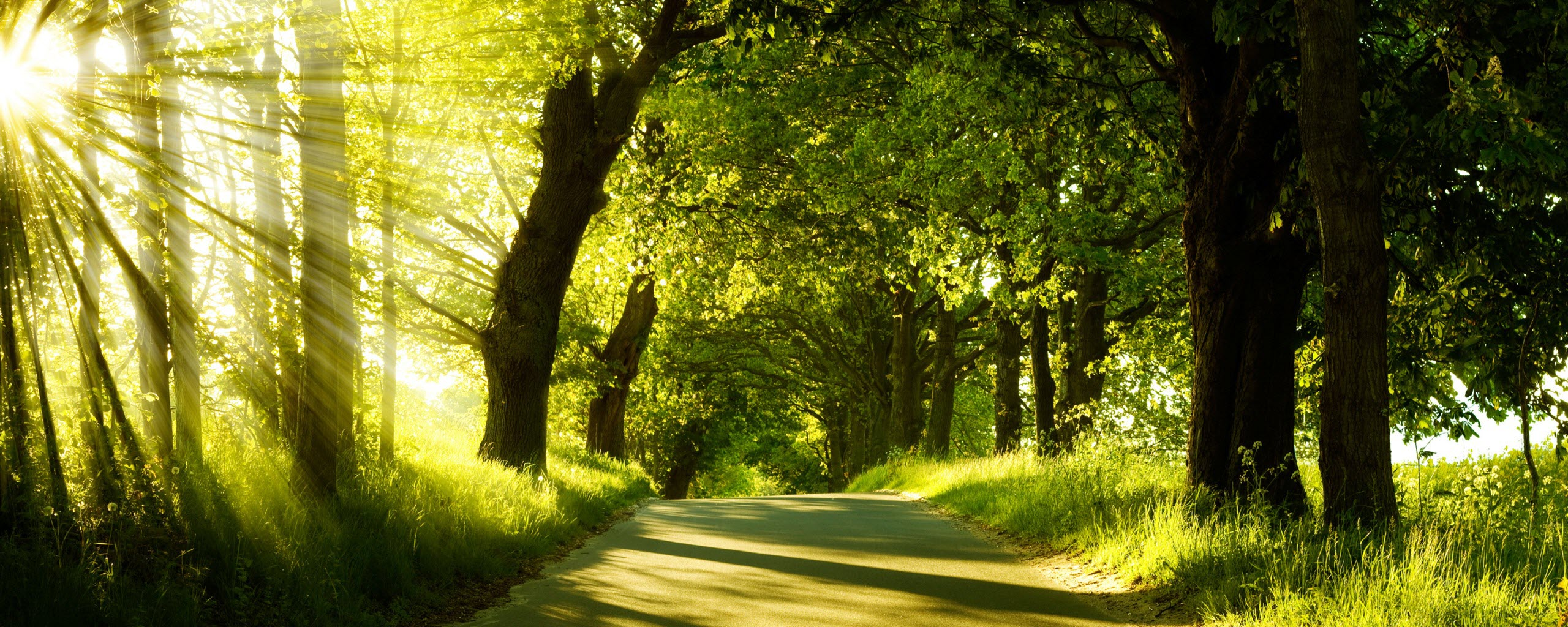 Green Nature Dual Monitor Wallpapers   HD Wallpapers   ID #8220
