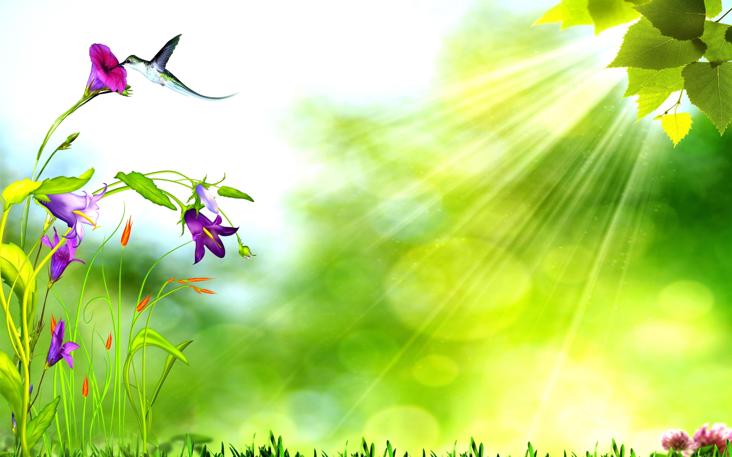 Nature background photo