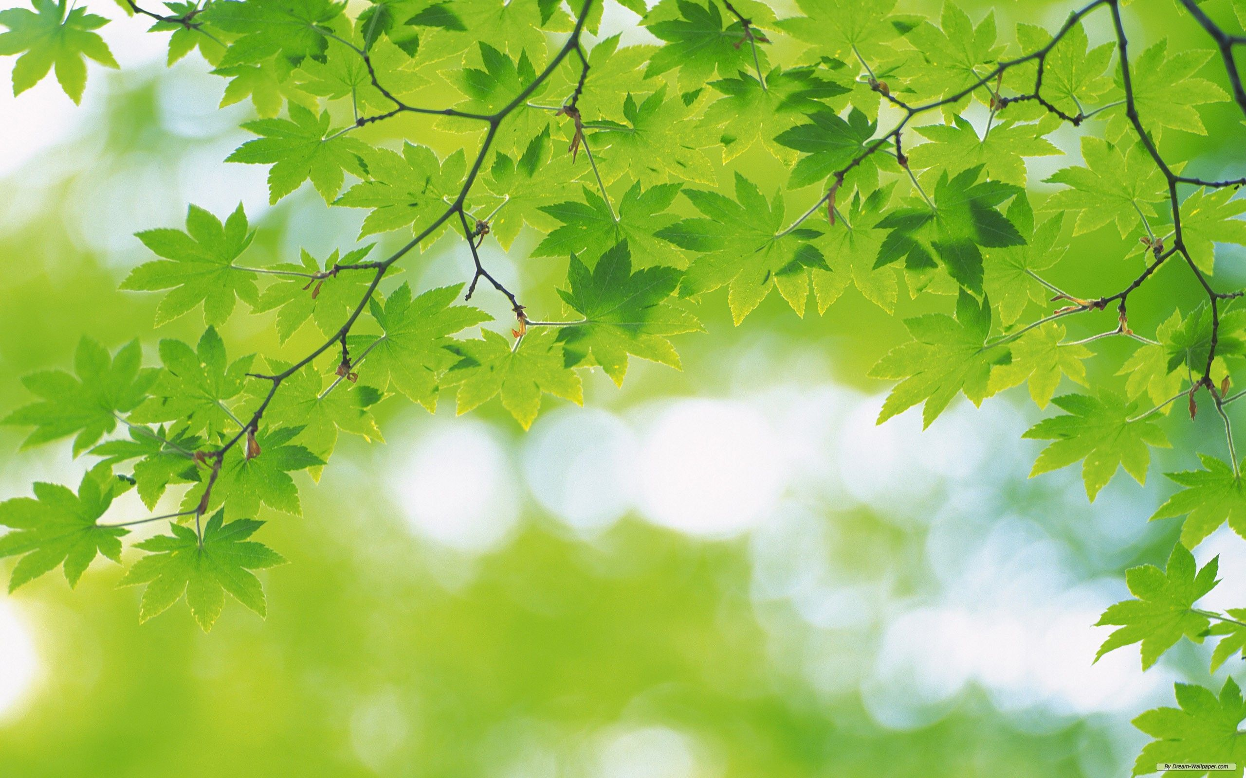 Nature Background And Images Collections - Picsy Buzz | Fonts ...