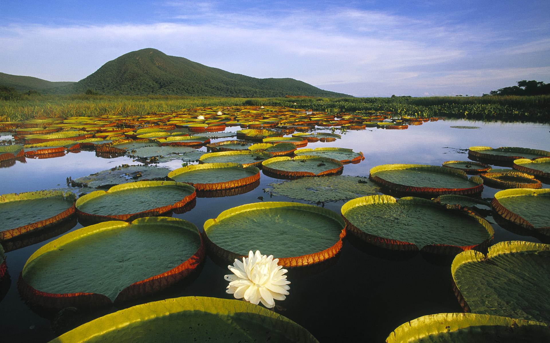 Nature - Photo gallery | MIRIADNA.COM
