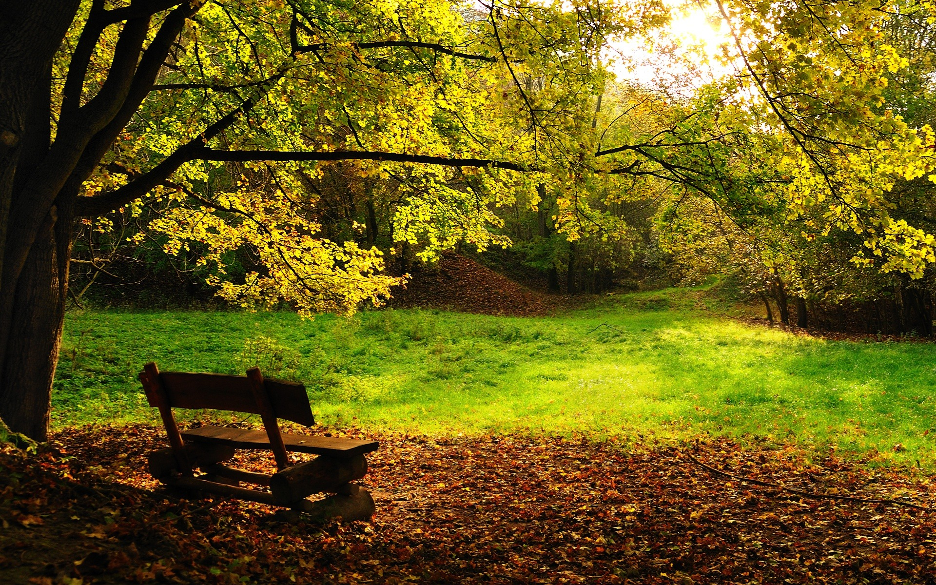 Nature wallpaper autumn trees wallpapers for free download about ...