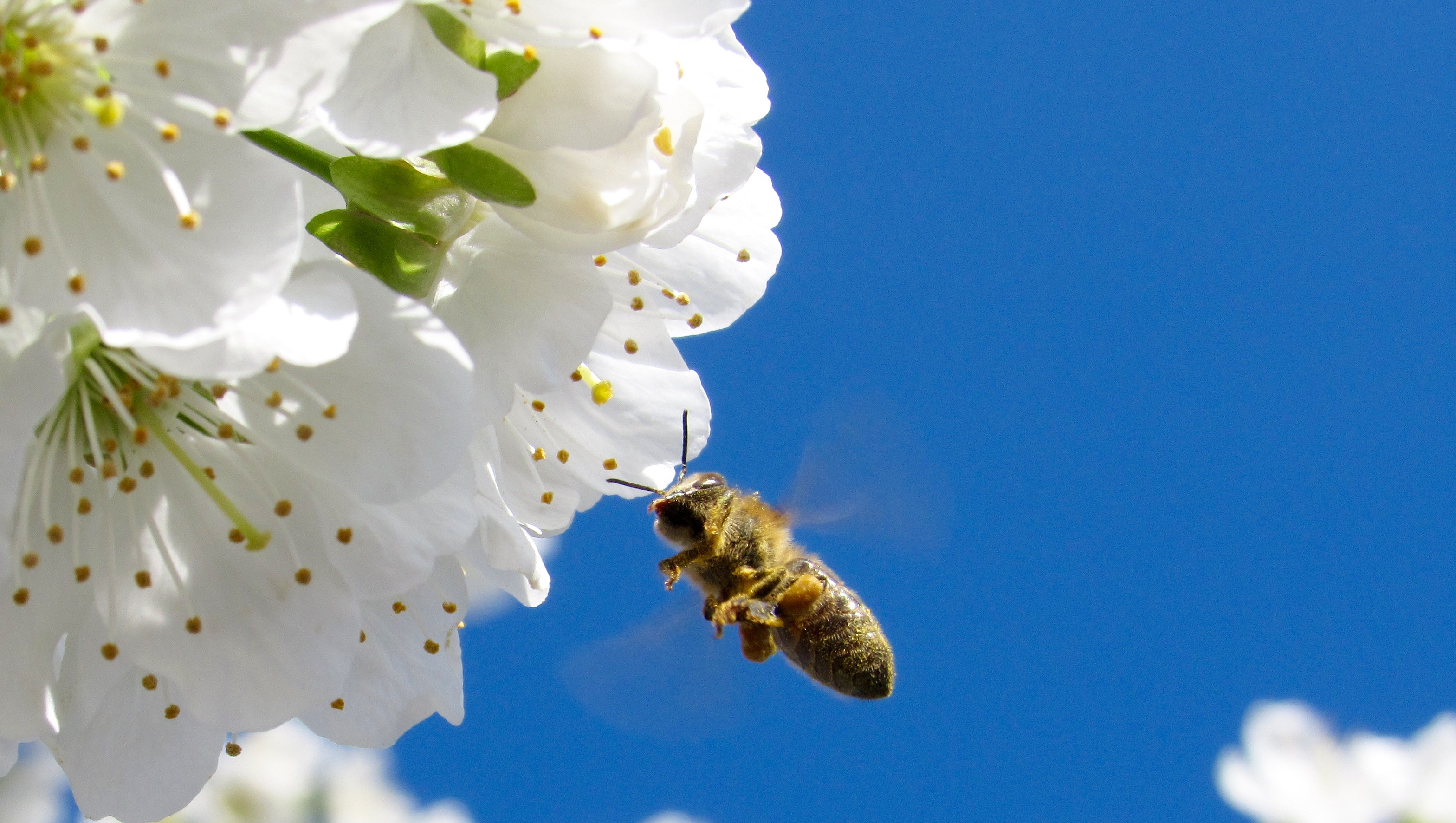 Nature, Bee, Flower, Fly, Fragrance, HQ Photo