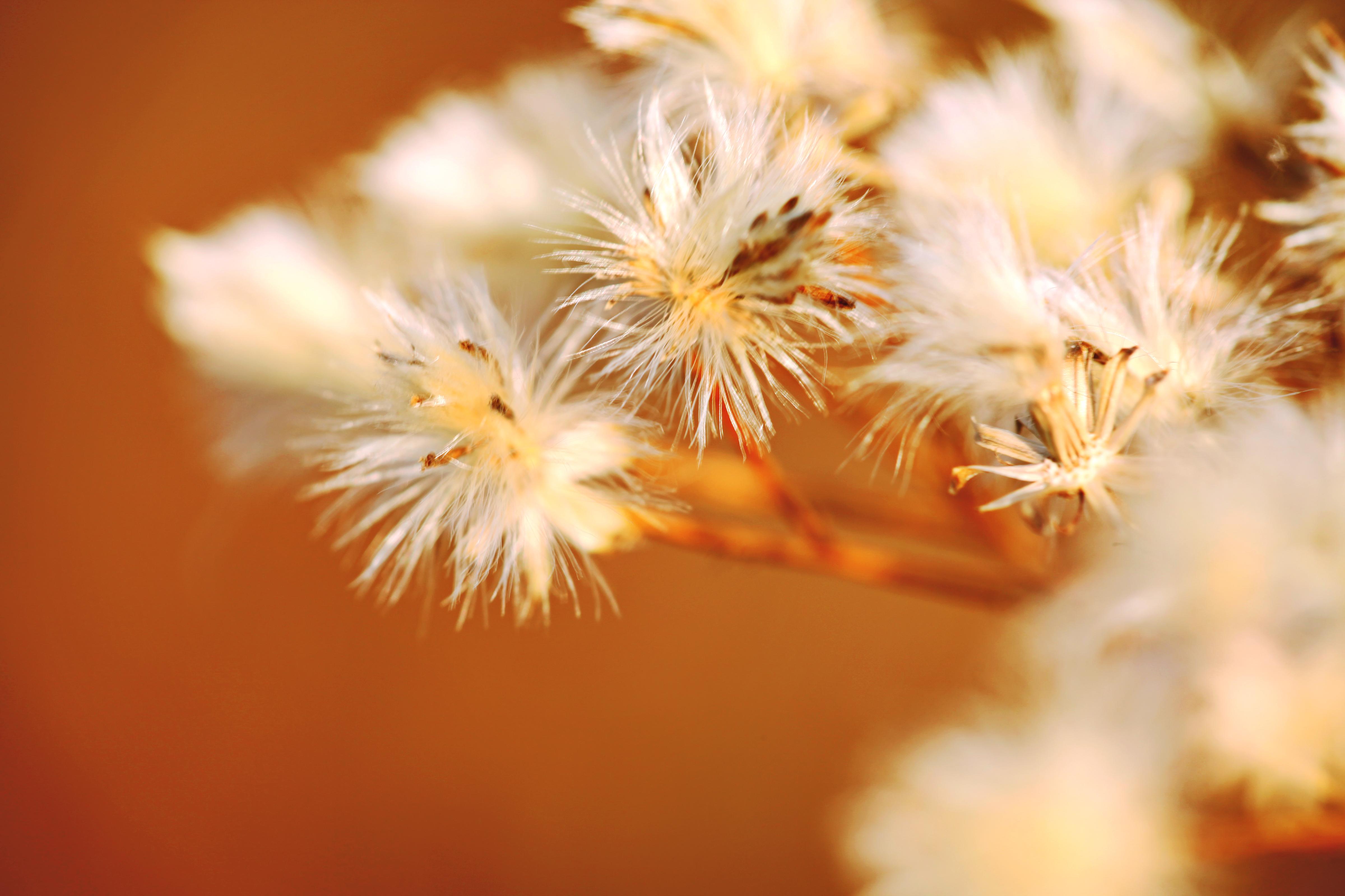 Nature background, Flower, Nature, Orange, Plant, HQ Photo