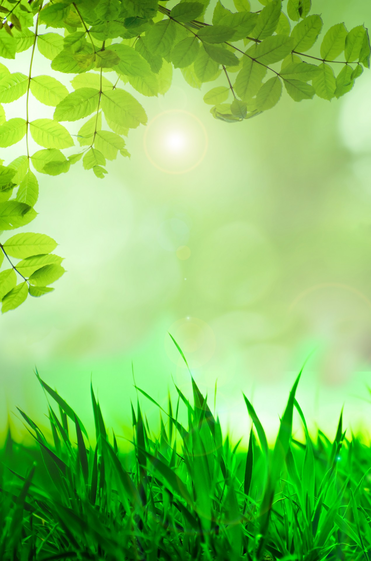 Natural Green Background Free Stock Photo - Public Domain Pictures