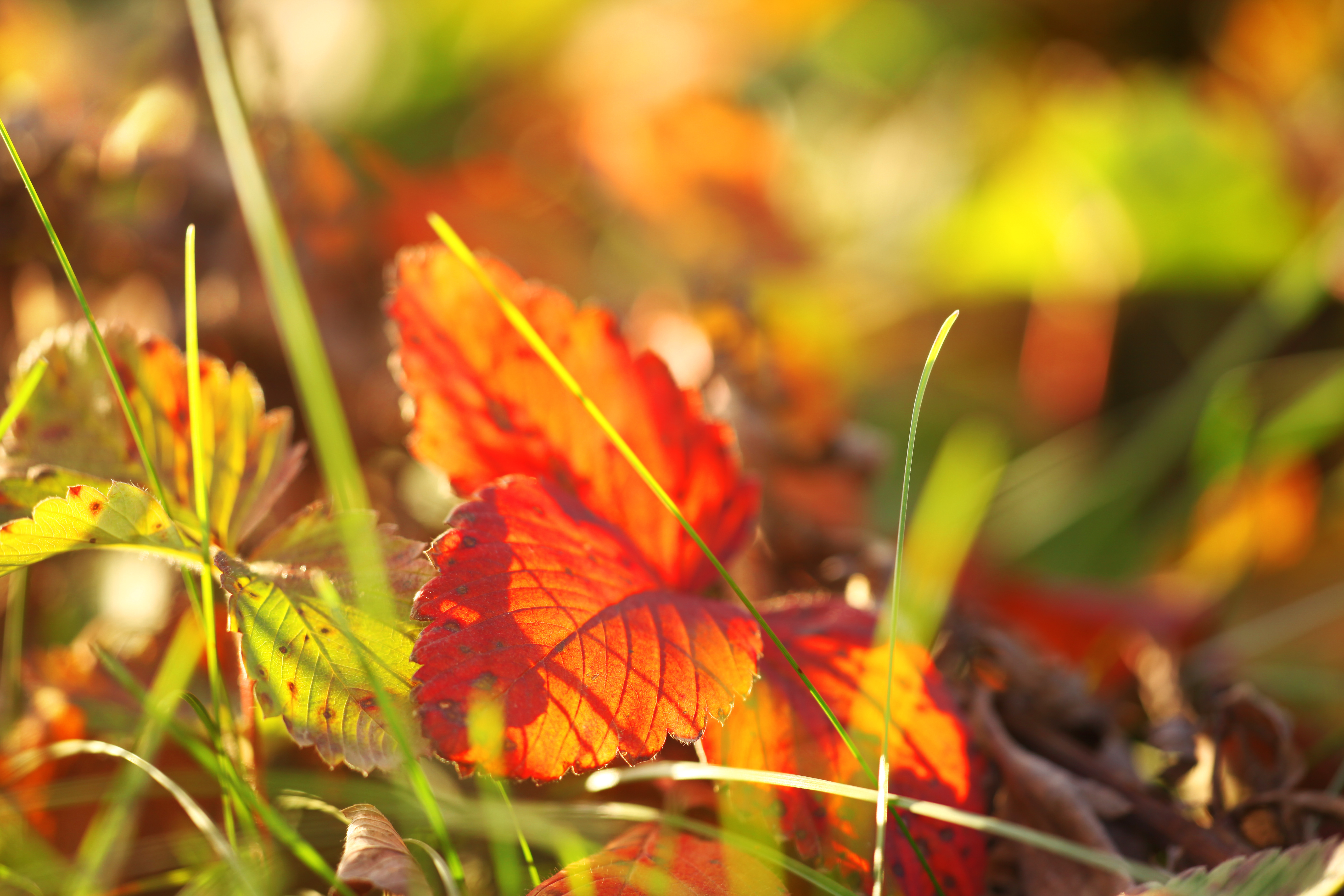 Nature background, Autumn, Fall, Grass, Green, HQ Photo