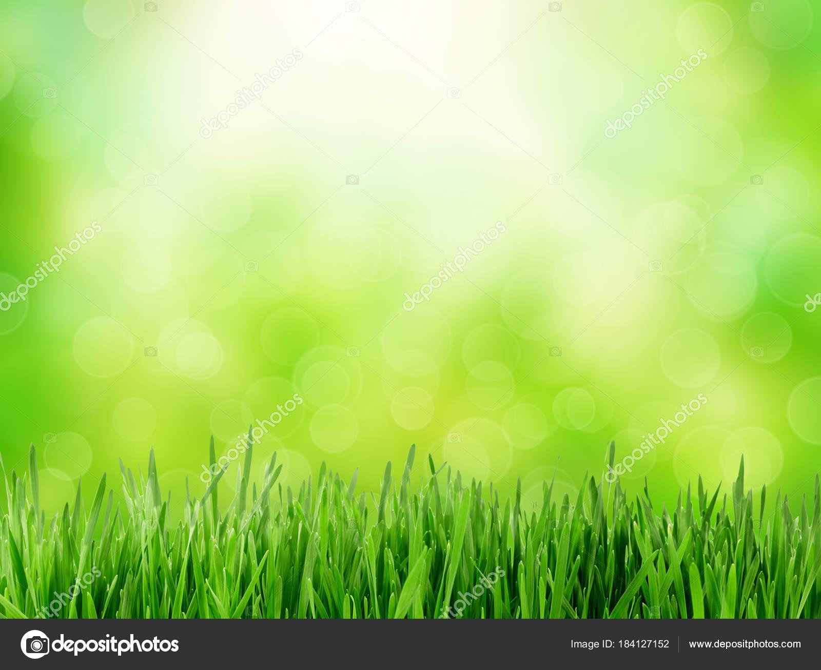 Abstract green nature background — Stock Photo © Preto_perola #184127152