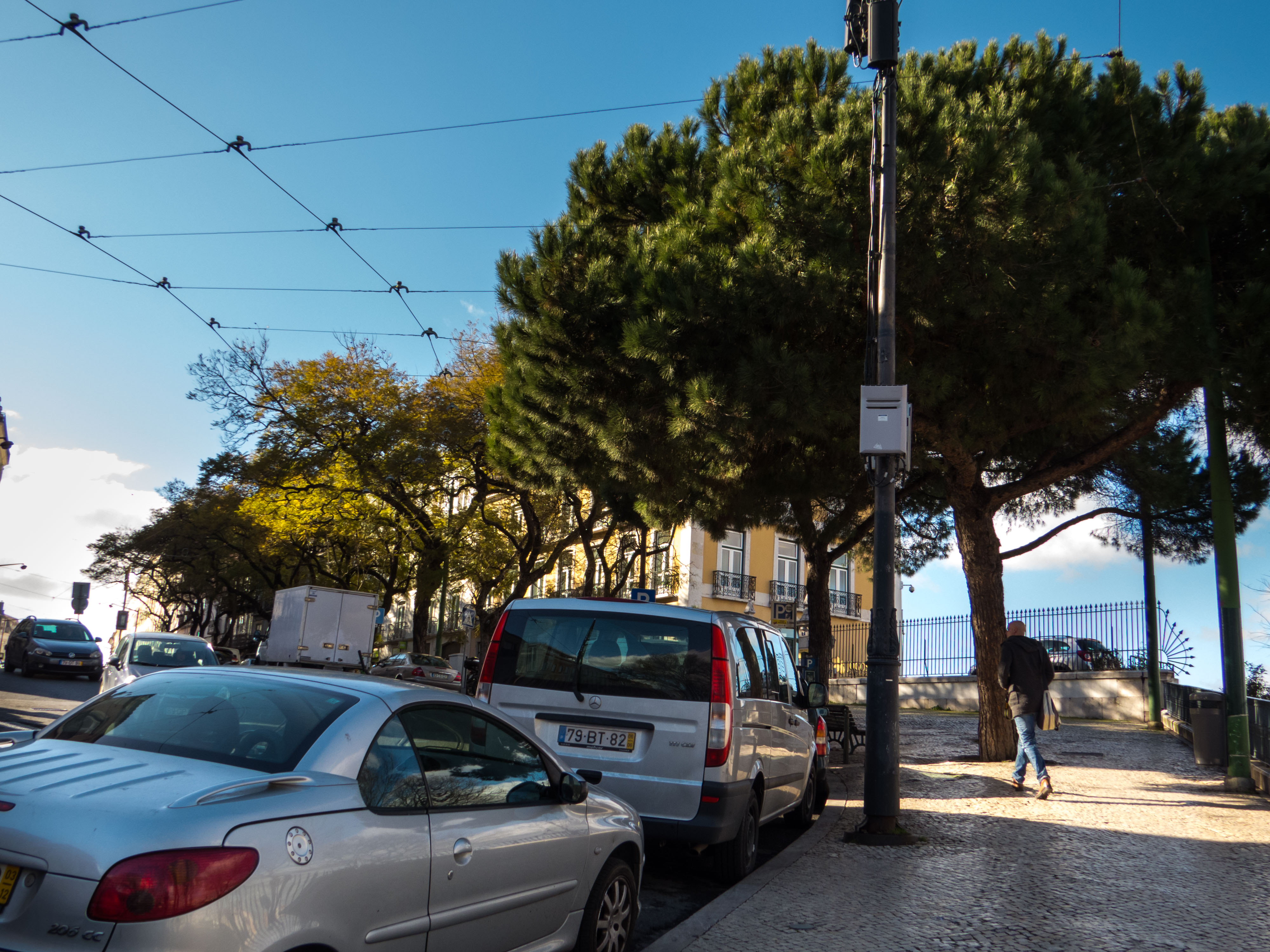 Nature in mid of traffic in lisbon photo