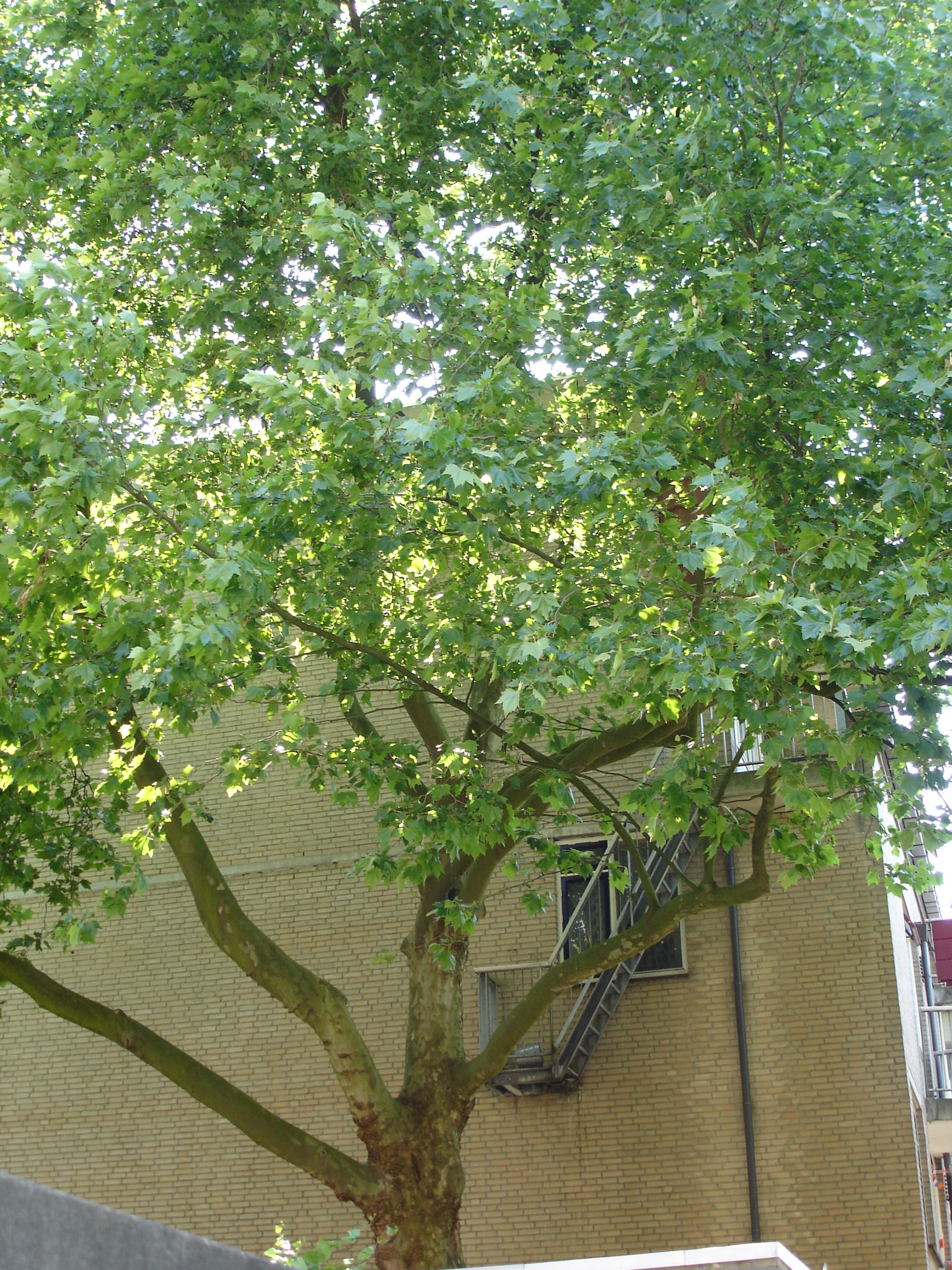 Nature in the city, Tree, Urban, House, Green, HQ Photo