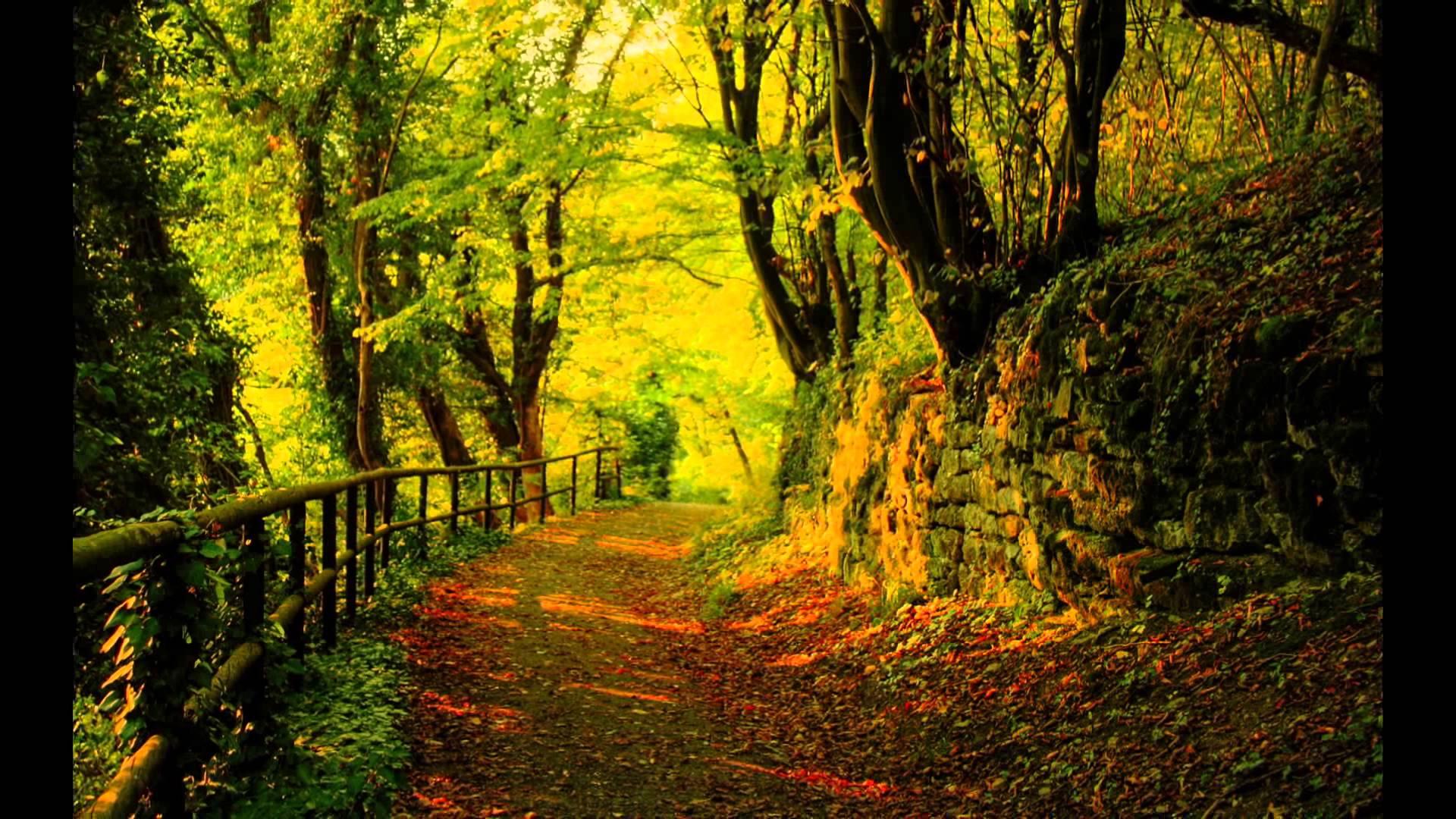 Best Nature Scene Forever - YouTube