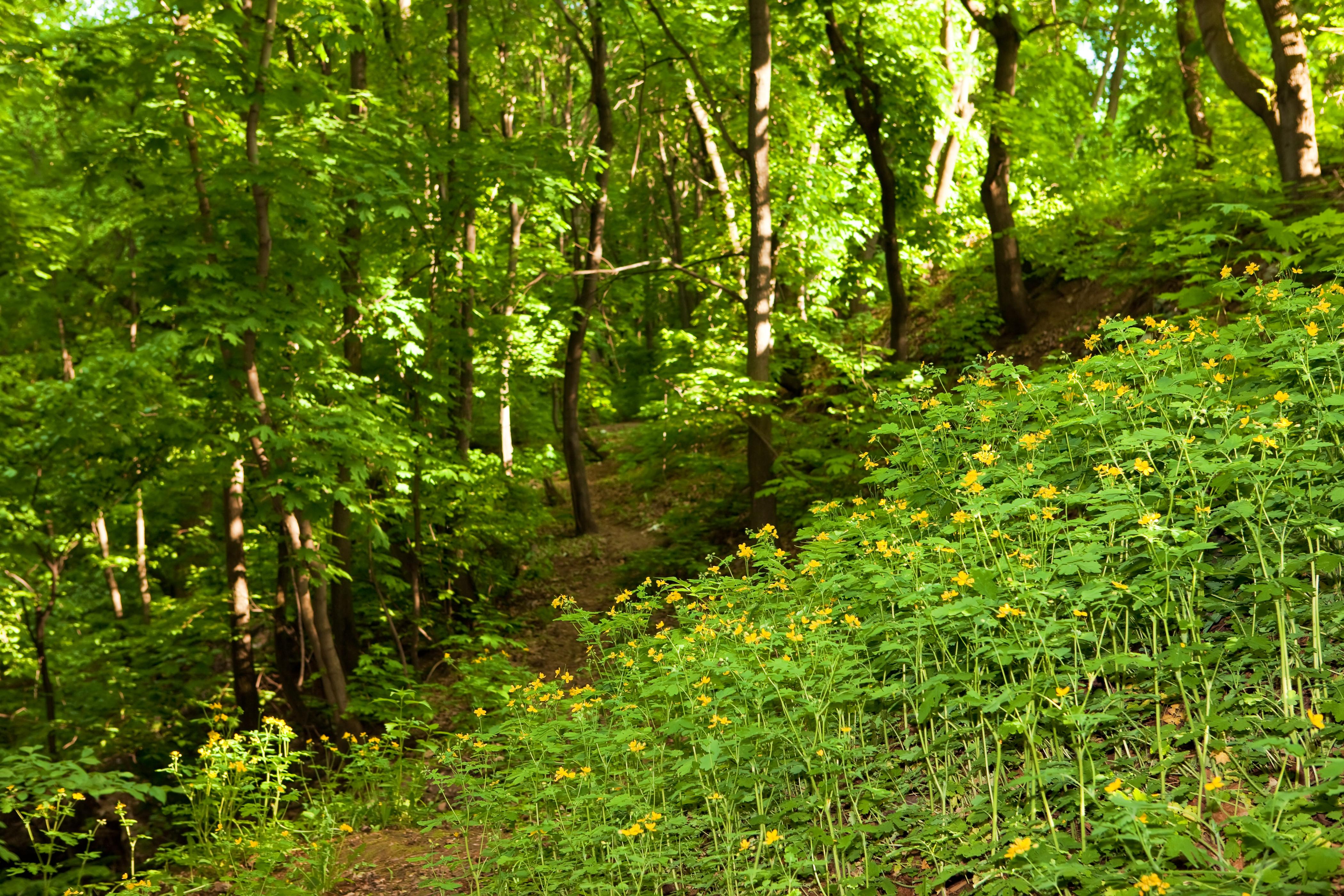 Nature scene photo
