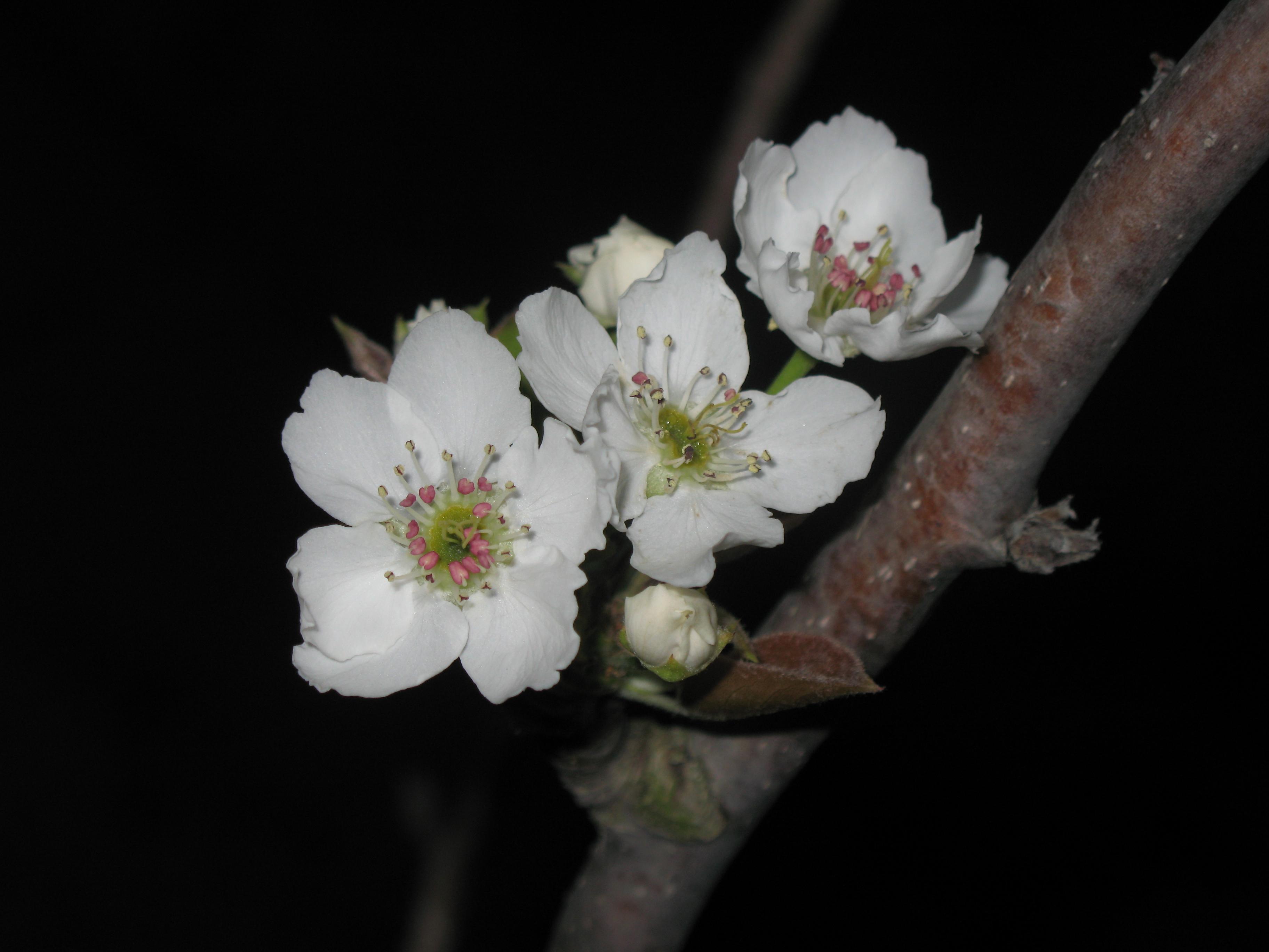 Nature simplistic beauty, Bloom, Flower, Life, Nature, HQ Photo