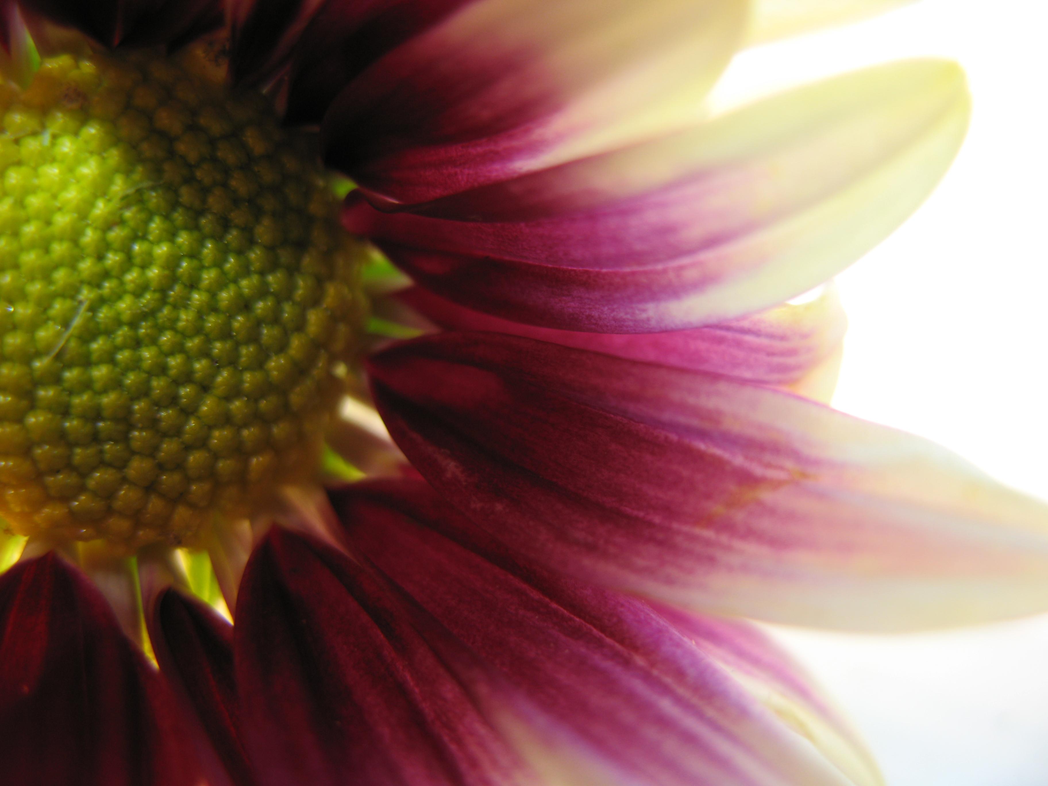 Nature simplistic beauty, Closeup, Flower, Life, Nature, HQ Photo