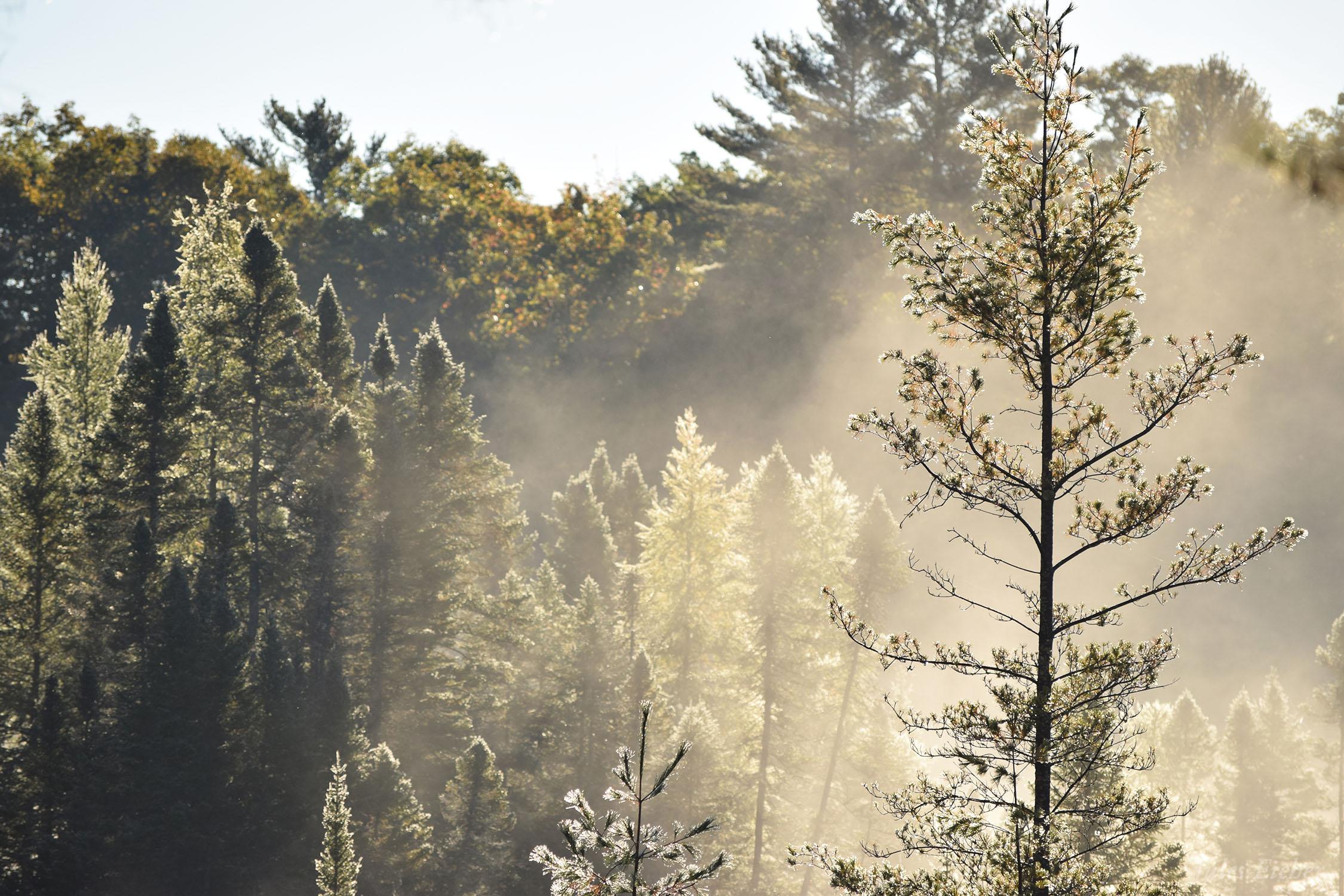 CS13 Nature Photography - Conserve School