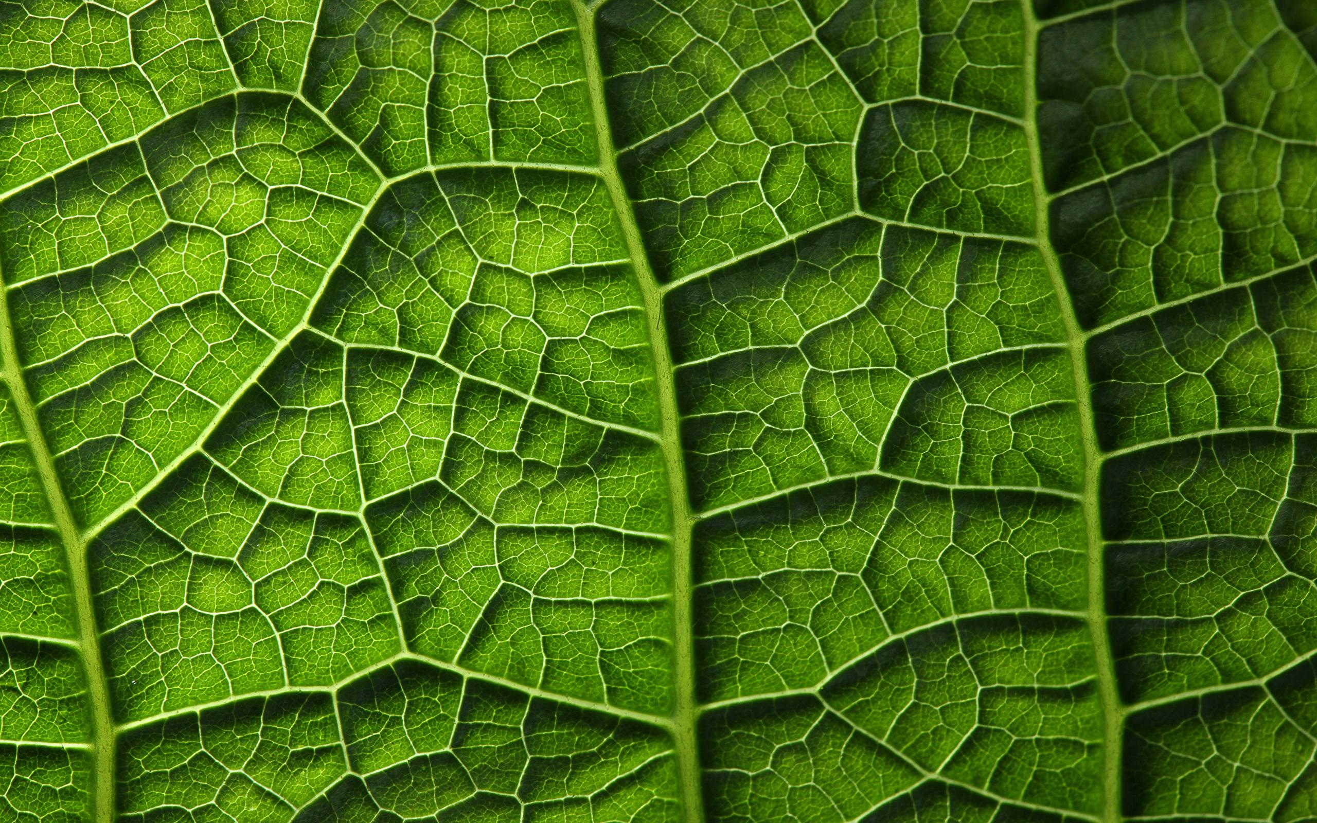 Image Foliage Texture Green Nature Macro Closeup 2560x1600