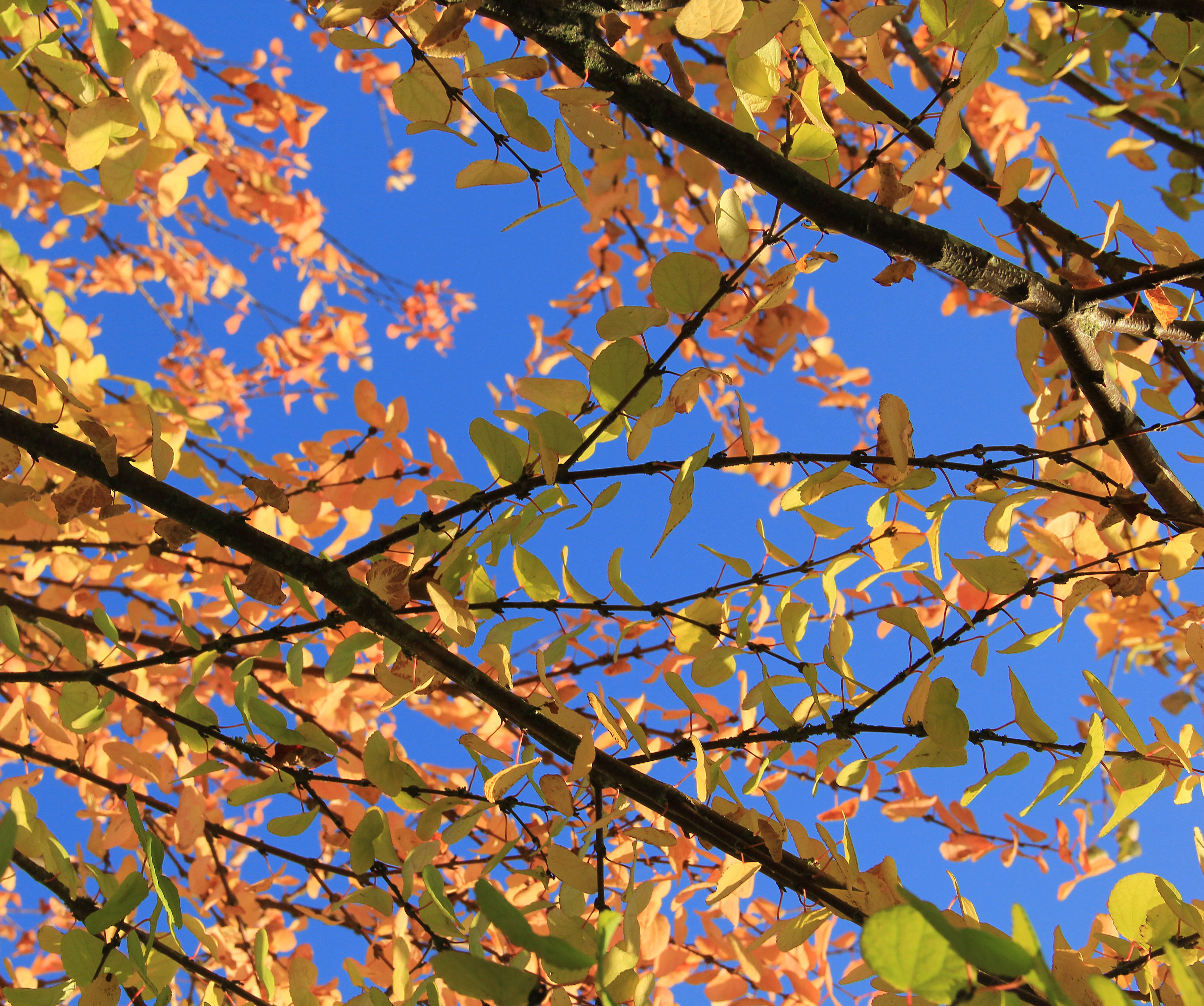 nature texture fall tree branch Green Colors Leaf Orange Autumn ...