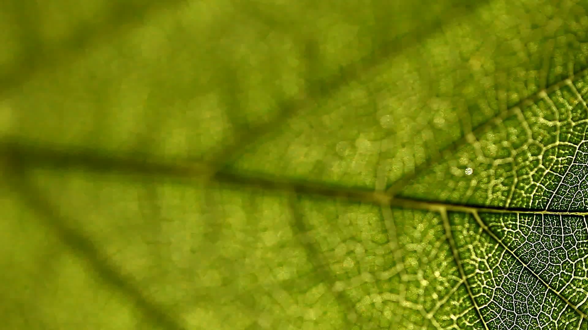 leaf, macro, nature, texture, background Stock Video Footage ...