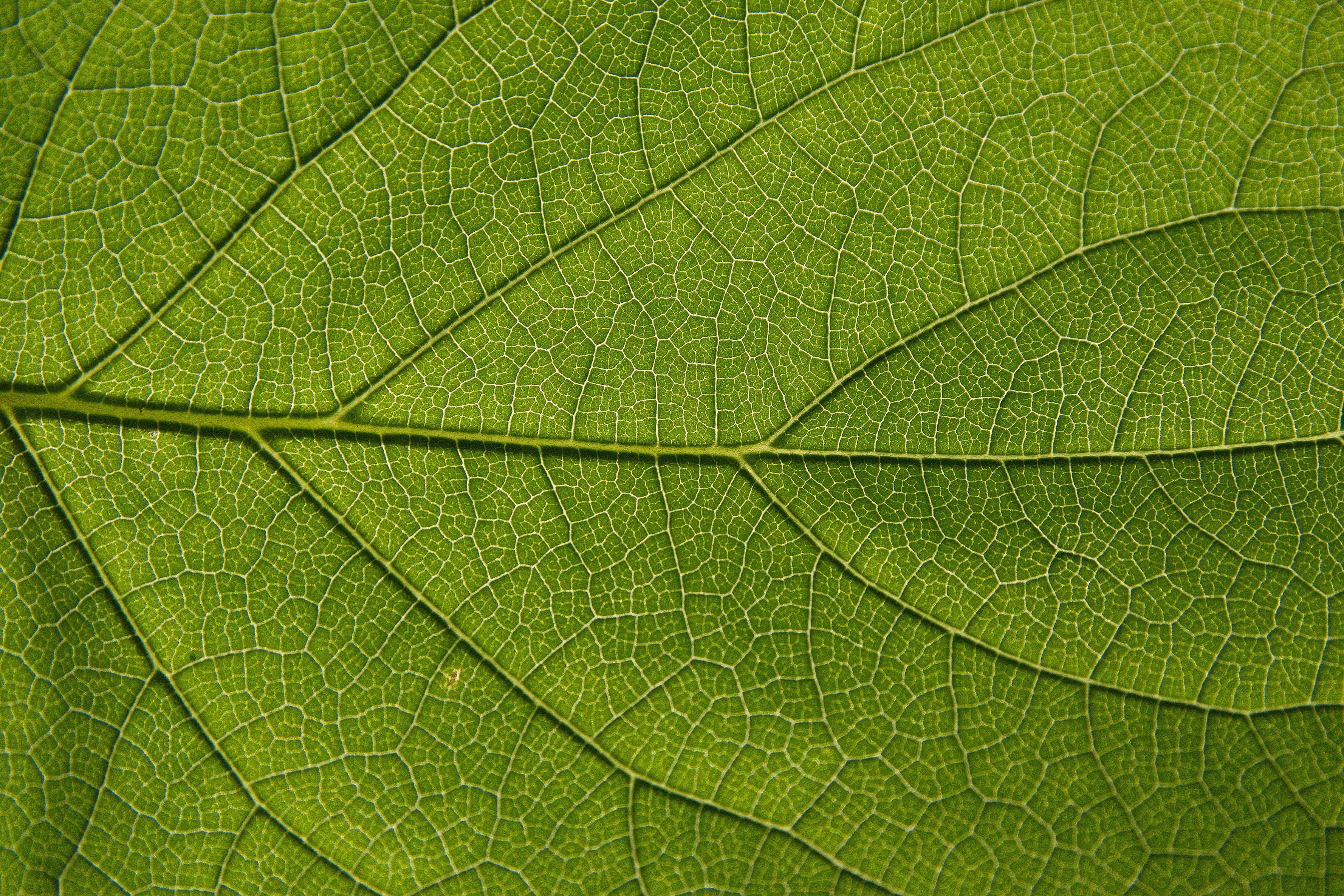 Nature Leaves Background Eight | Photo Texture & Background