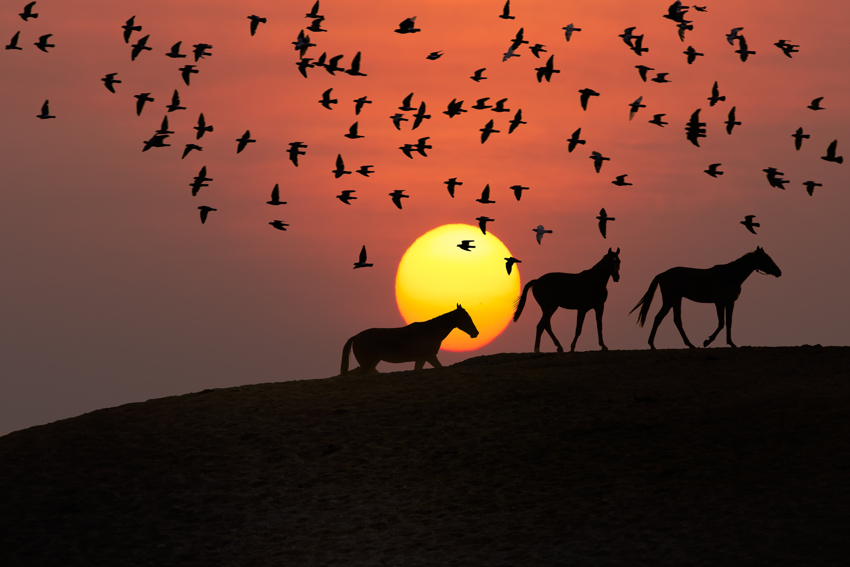 Nature, Bird, Dark, Fly, Horse, HQ Photo