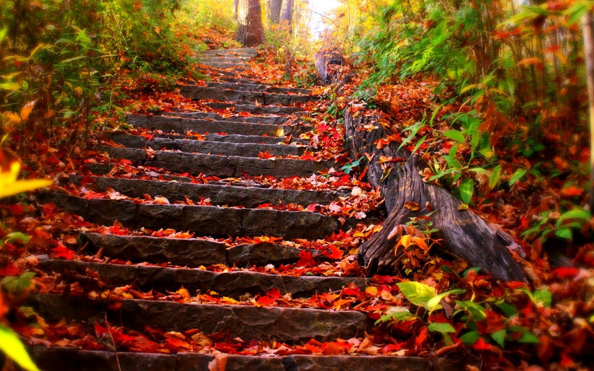 Nature's stairway photo