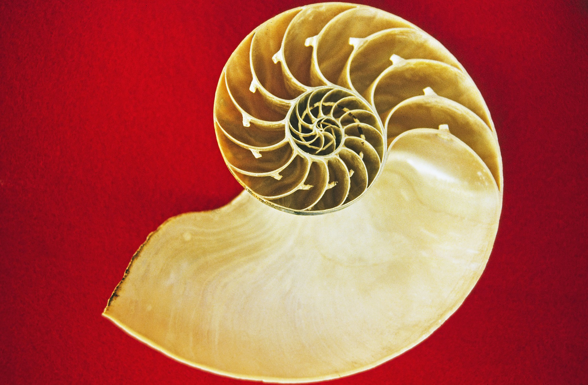 Nautilus photo