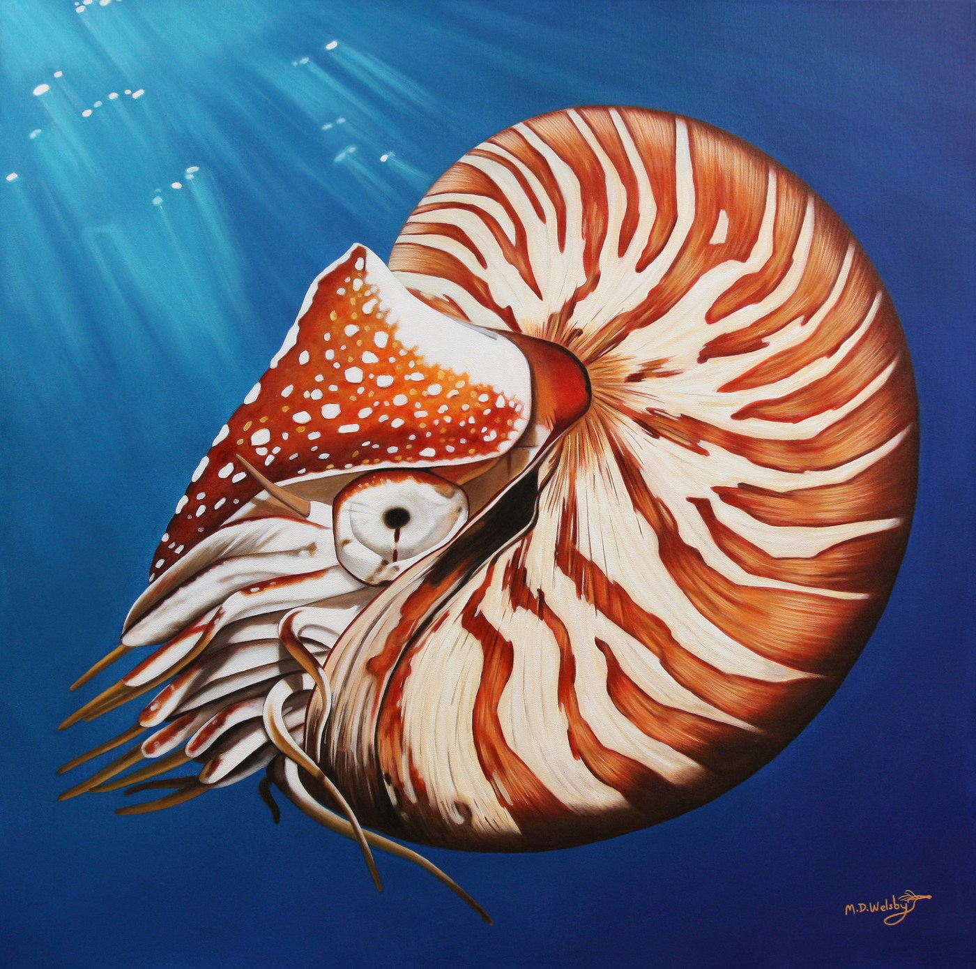 Nautilus | ART LOGIC