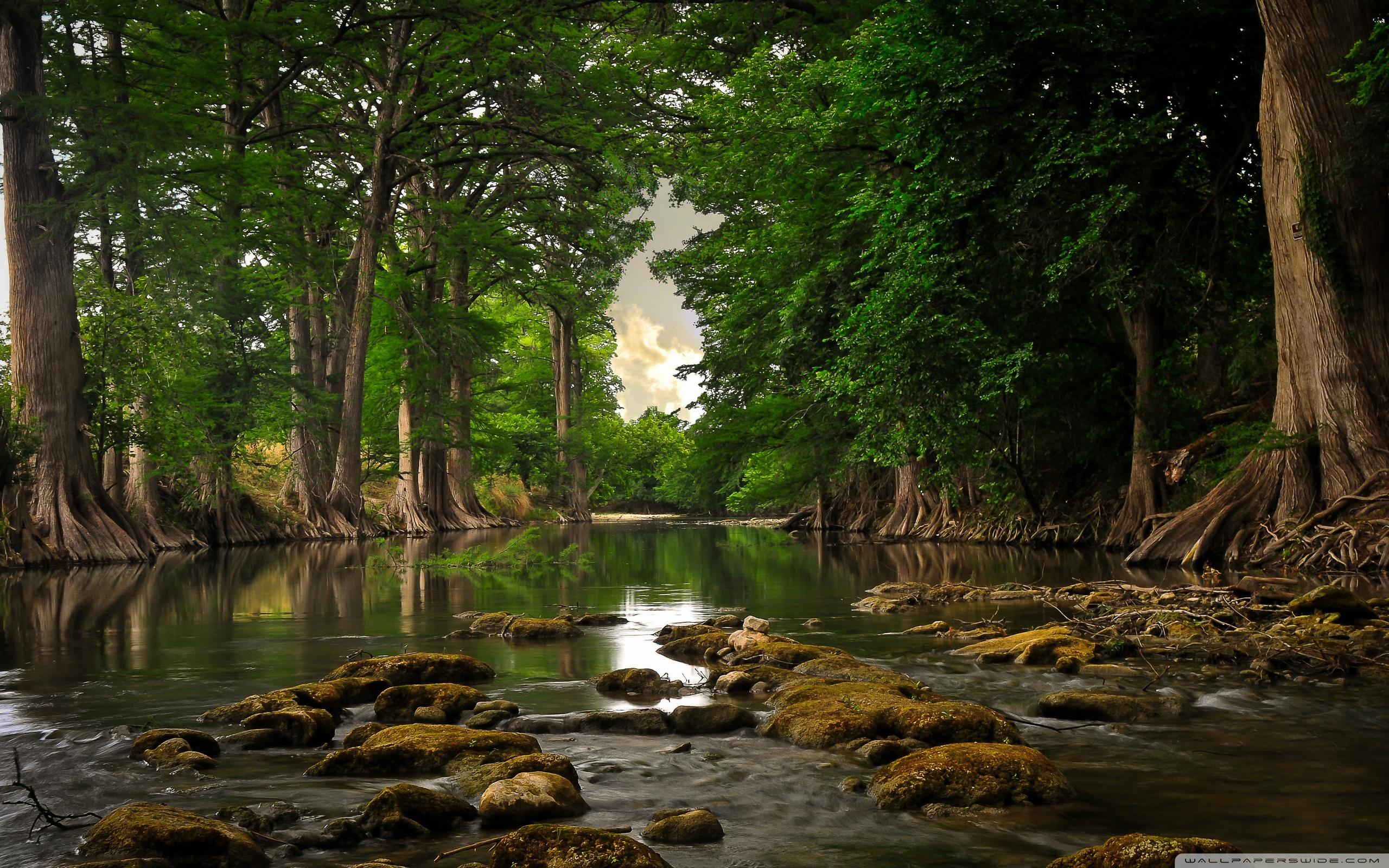 Trees Roots Near River ❤ 4K HD Desktop Wallpaper for 4K Ultra HD TV ...