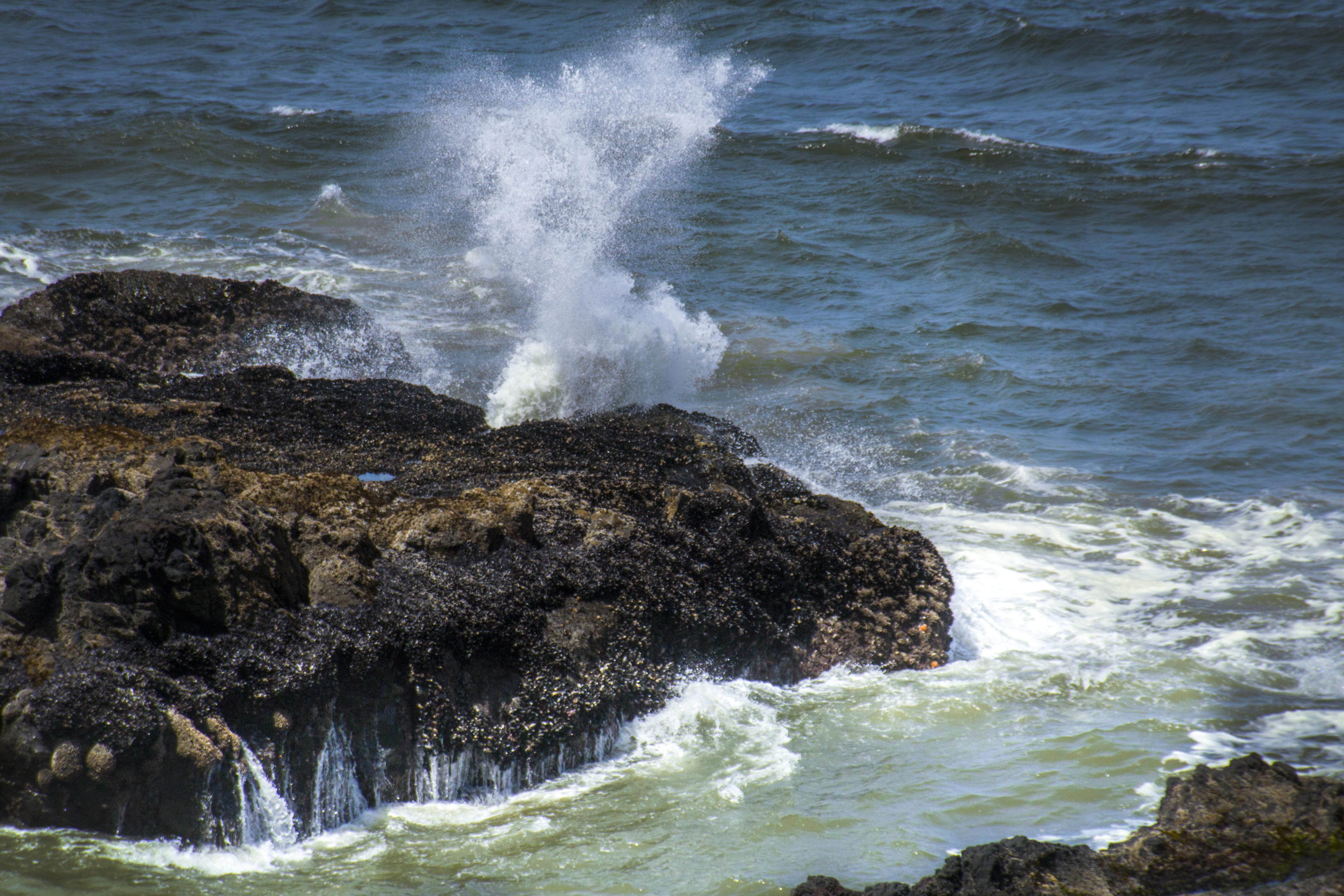 Neptune north, oregon, beach photo