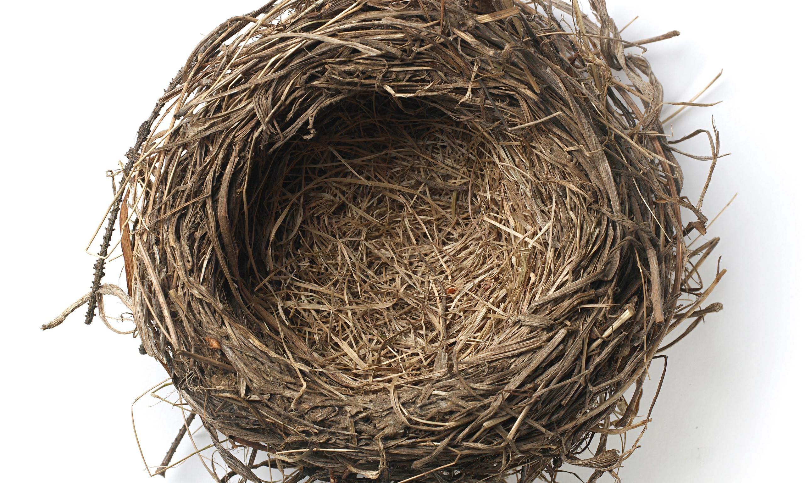 2560x1536px Nest 1542.69 KB #294483