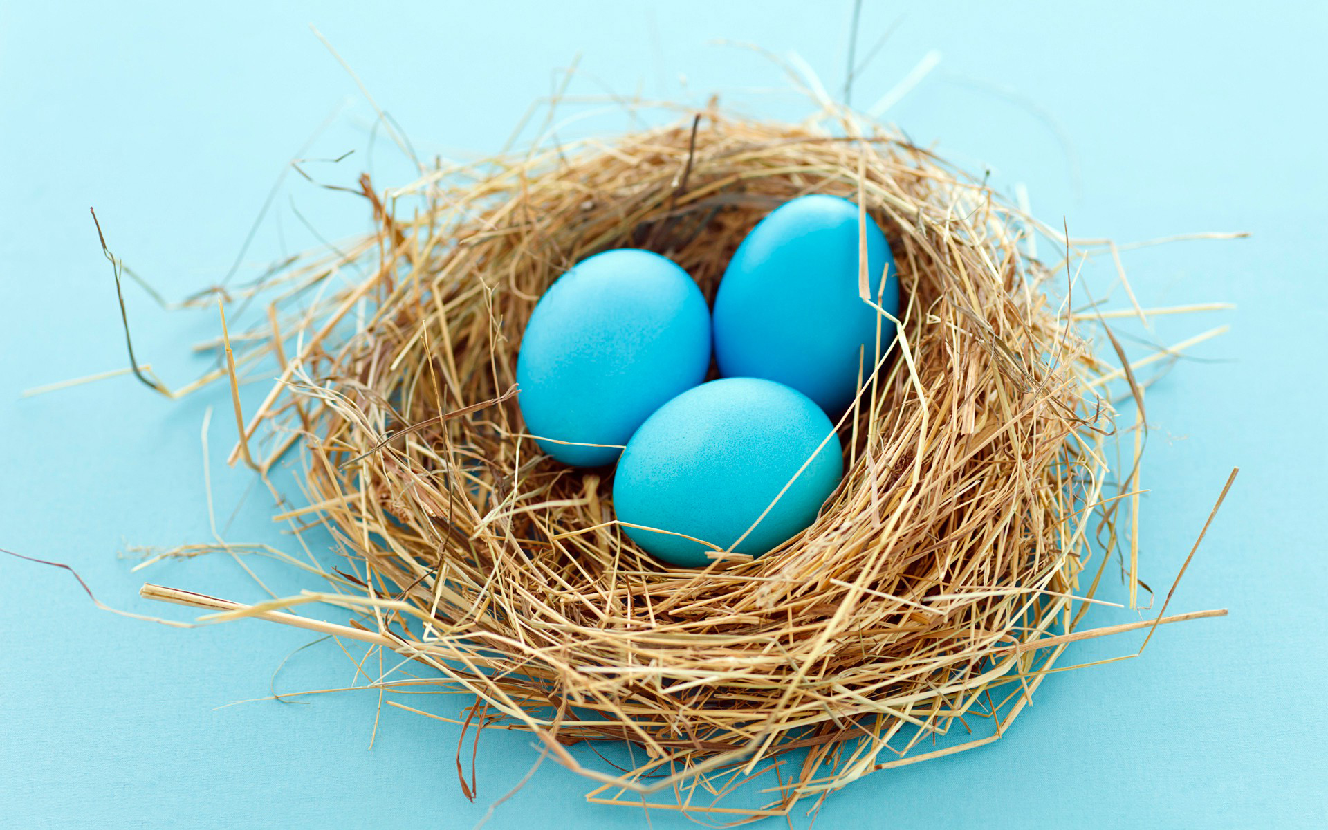 Nest with Eggs wallpaper