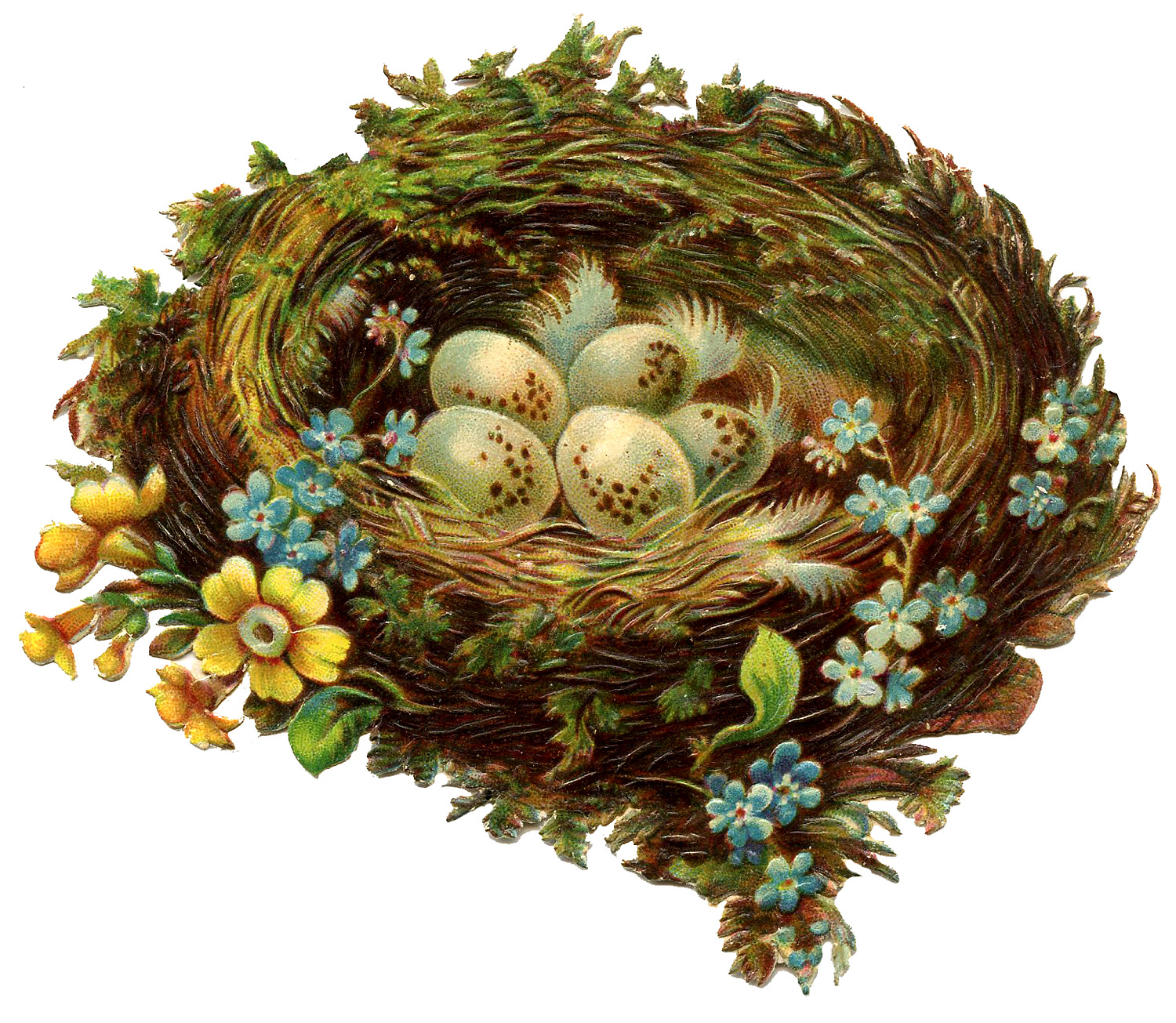 Vintage Graphic - Pretty Nest with Eggs & Flowers - The Graphics Fairy